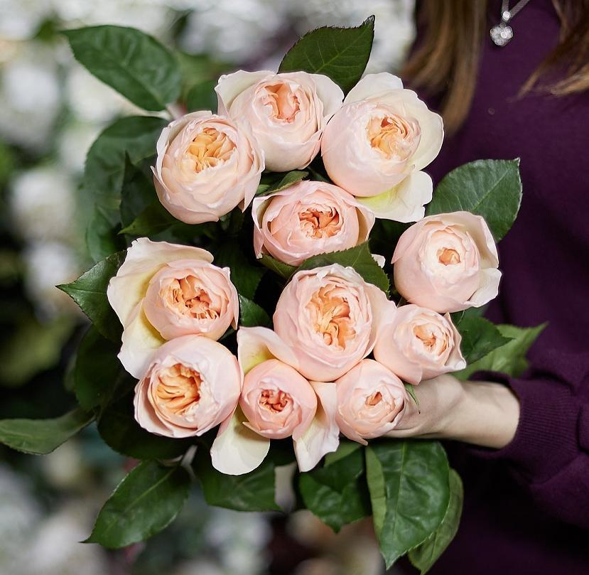11 пионовидных роз Juliet 50 см фото