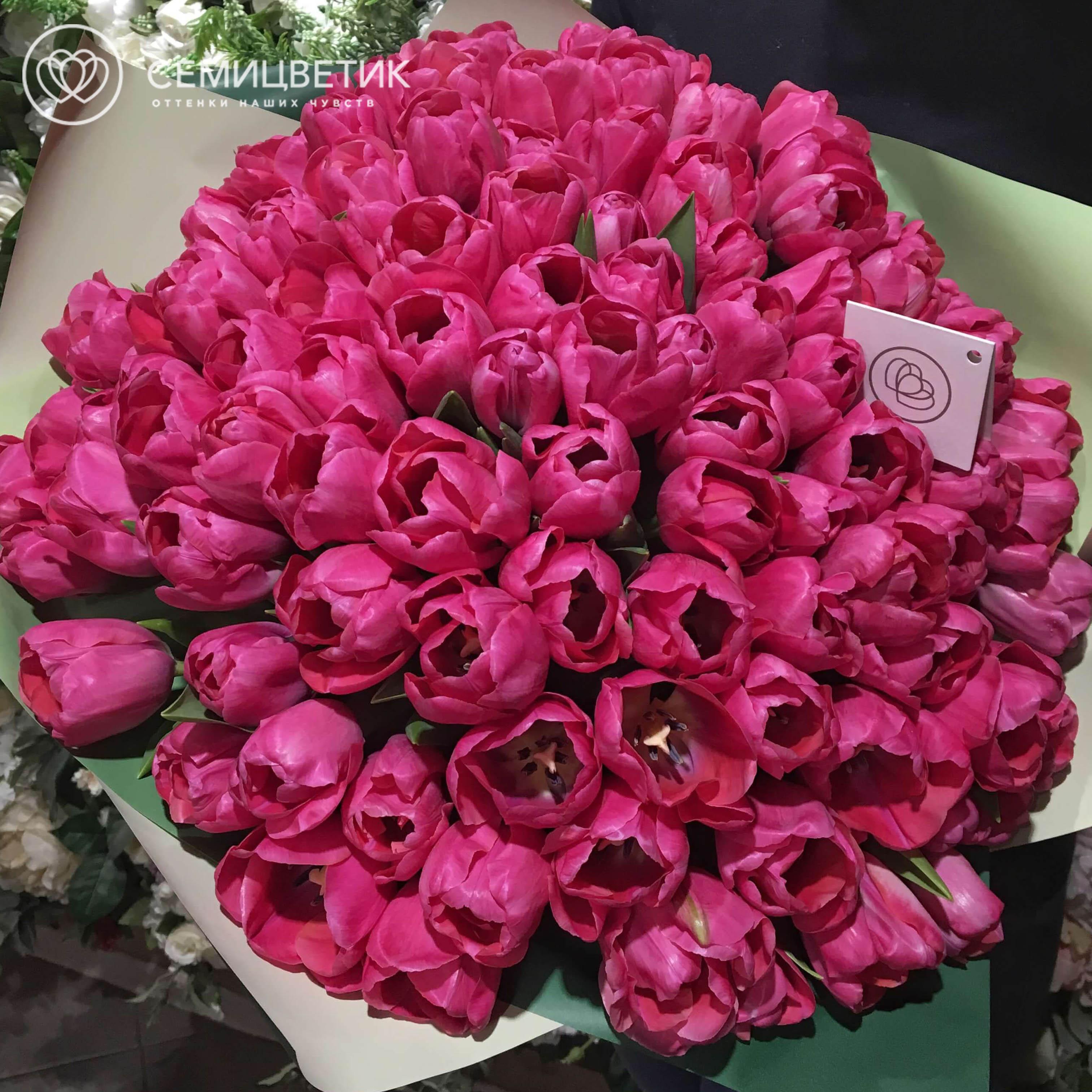 101 ярко-розовый тюльпан фото