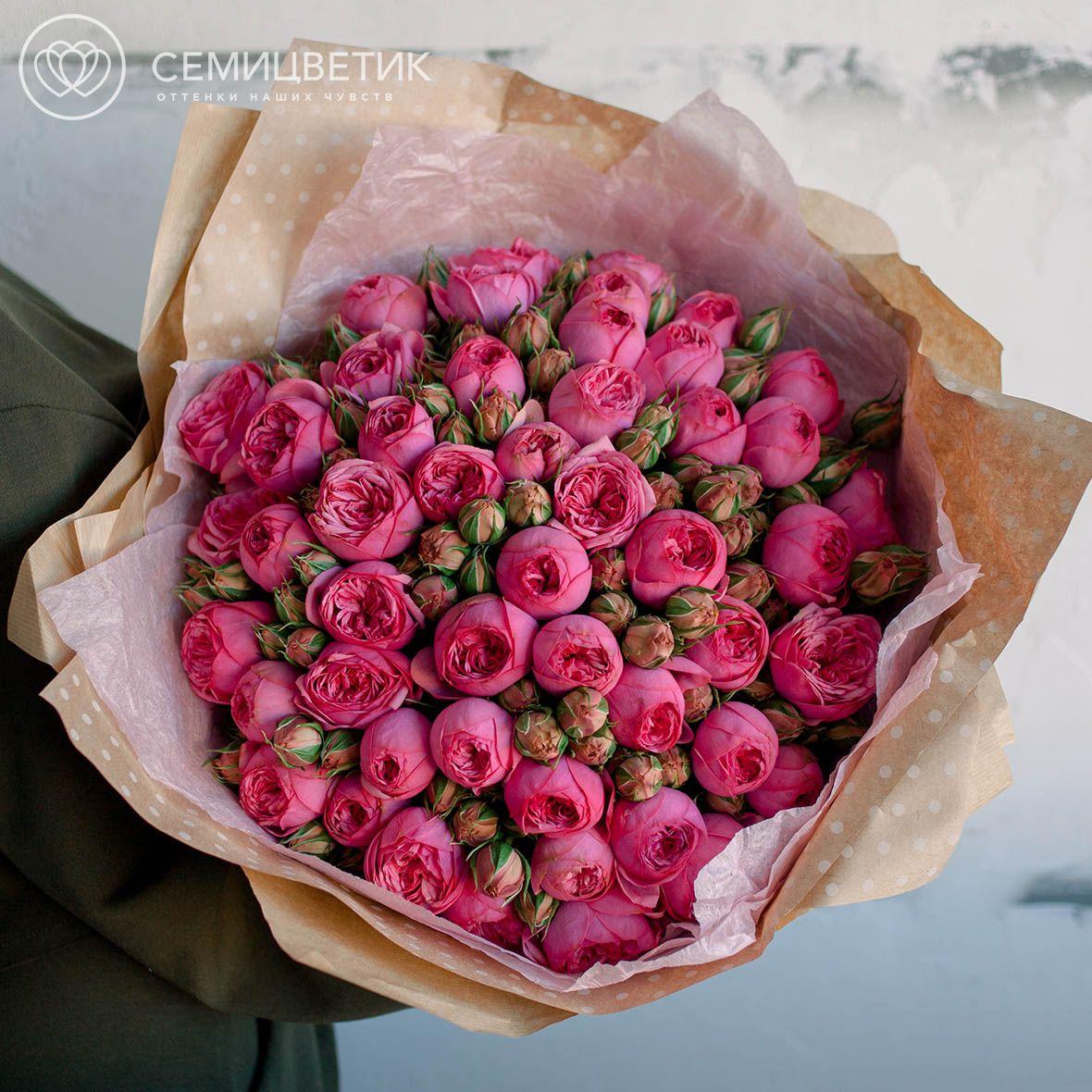 51 пионовидная кустовая роза Pink Piano фото