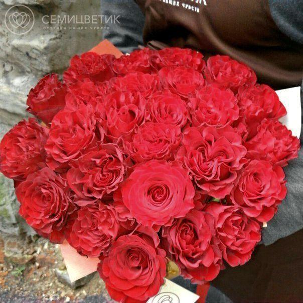 25 пионовидных одноголовых красных роз 50 см фото