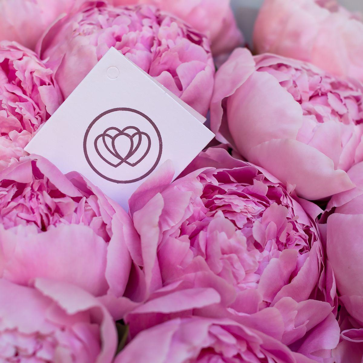 Пионы розовые фото