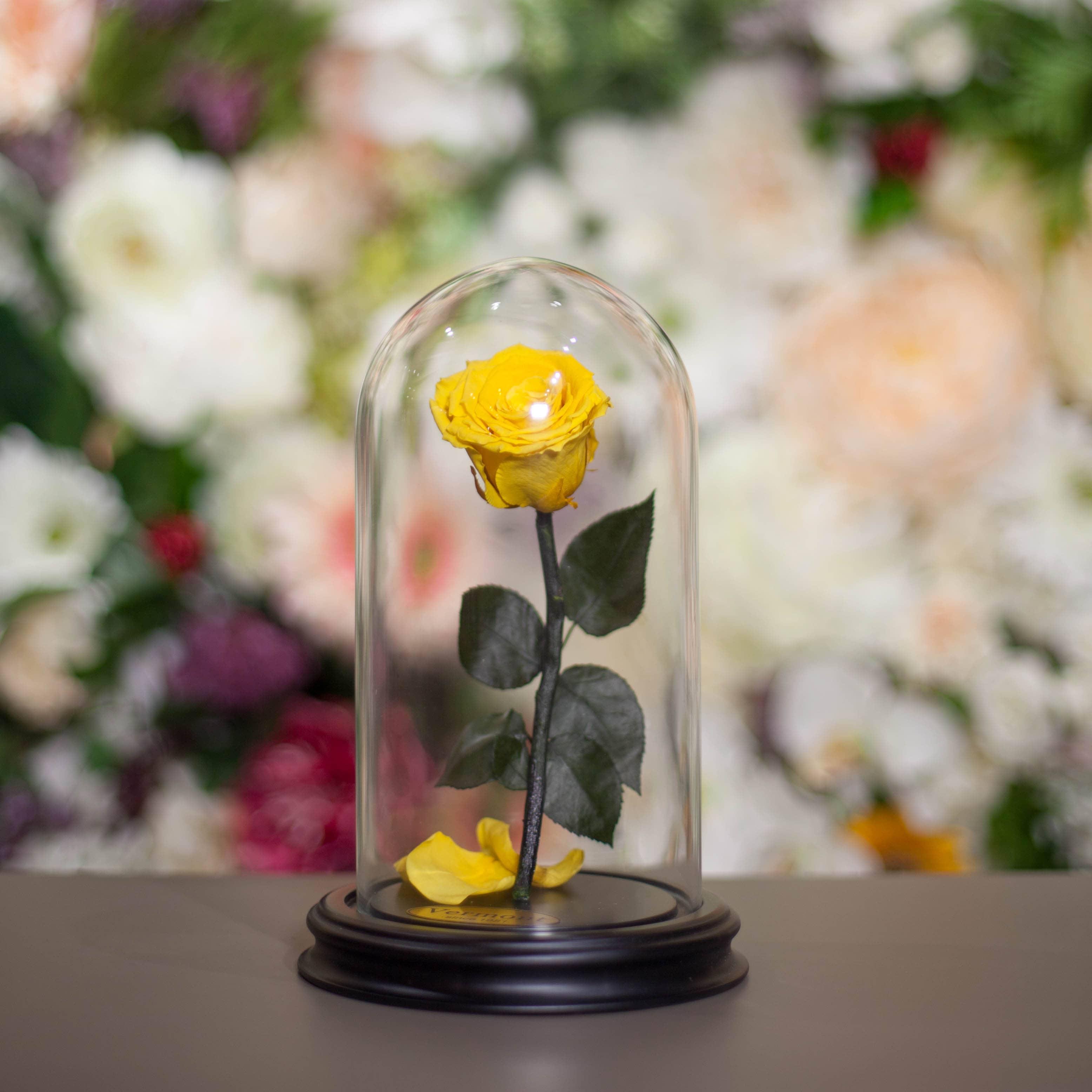 Роза в Колбе H22 * D13 Сафран (желтая) фото