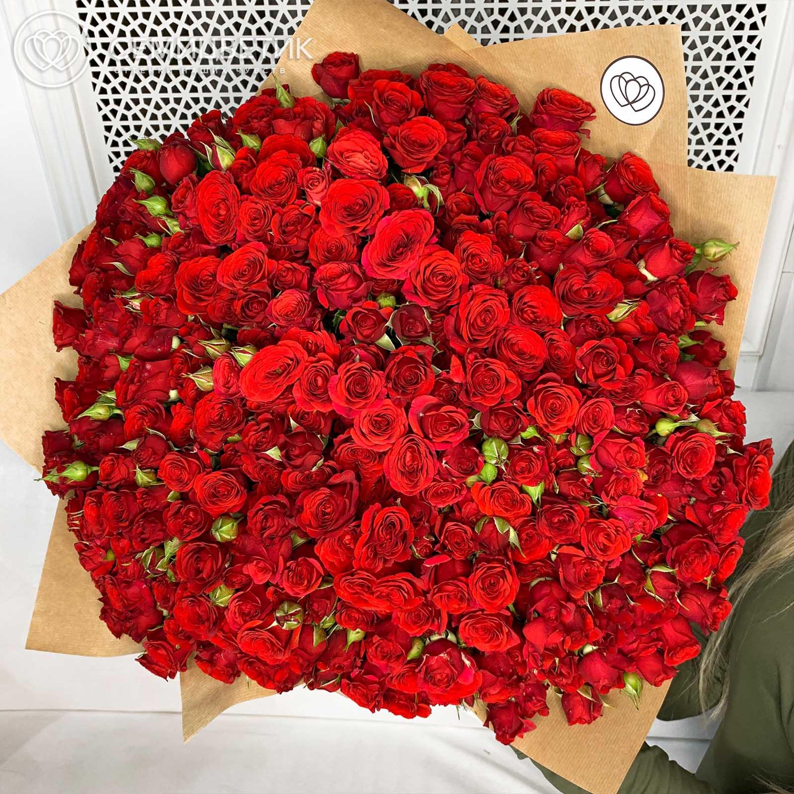 101 красная кустовая роза в упаковке фото