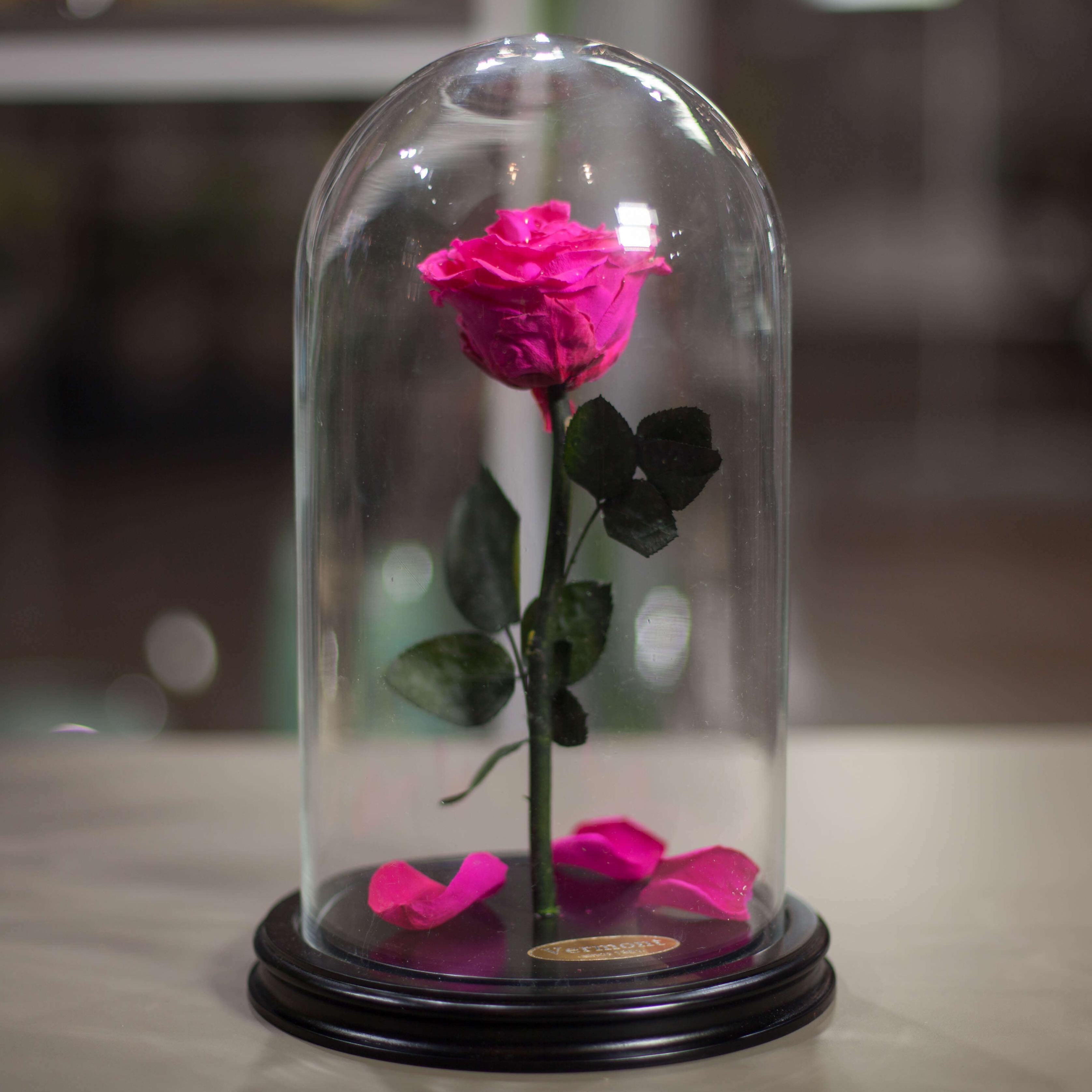 Роза в Колбе H31 * D18 Шокин пинк (ярко-розовая) фото