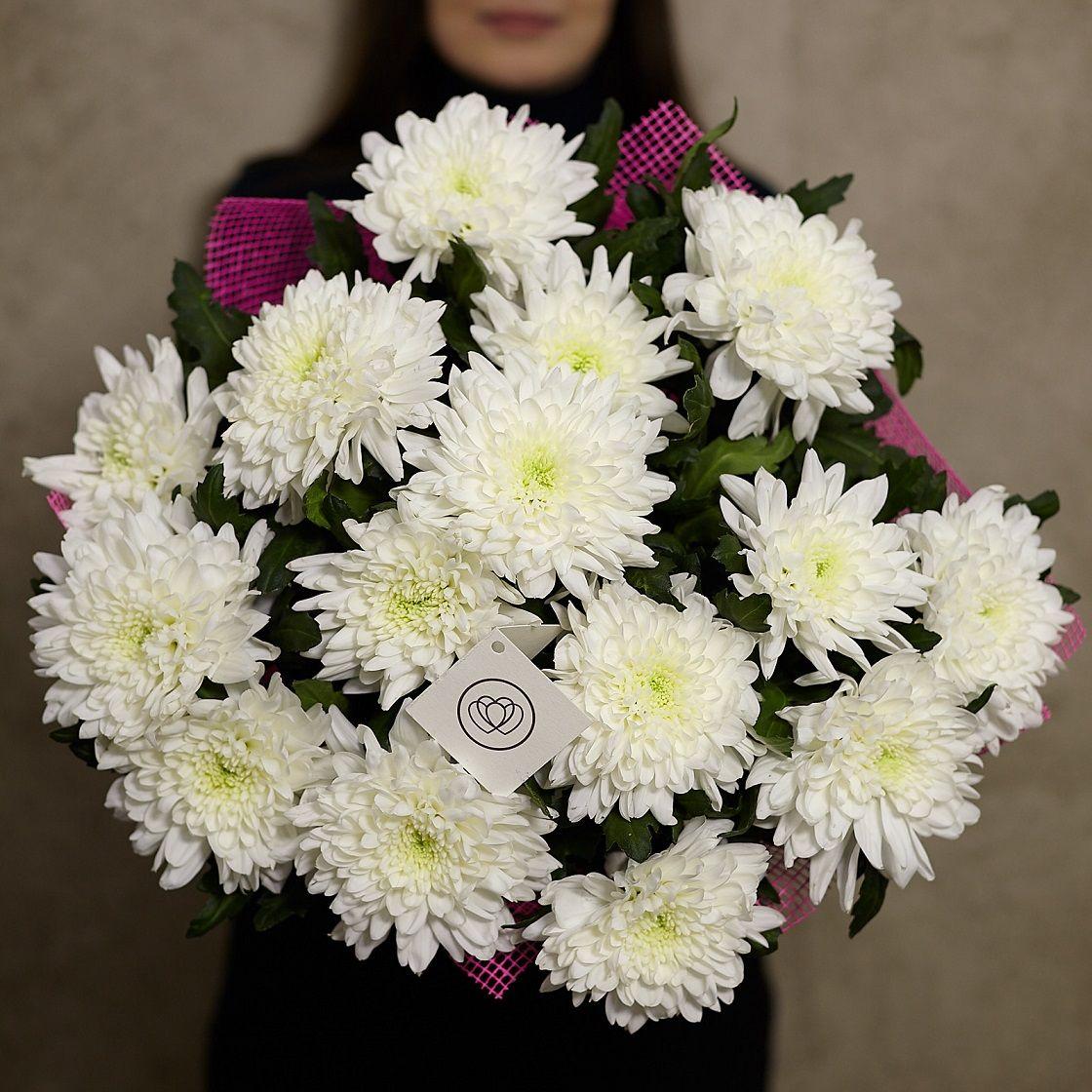 15 одноголовых хризантем фото