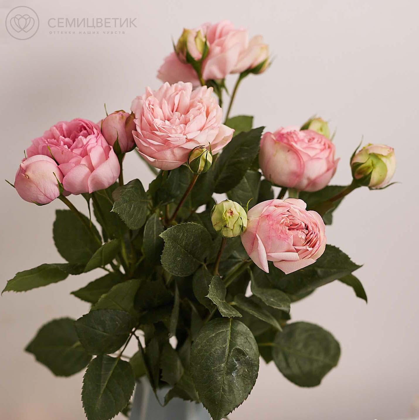 5 пионовидных роз Брайдал Пьяно 50 см фото