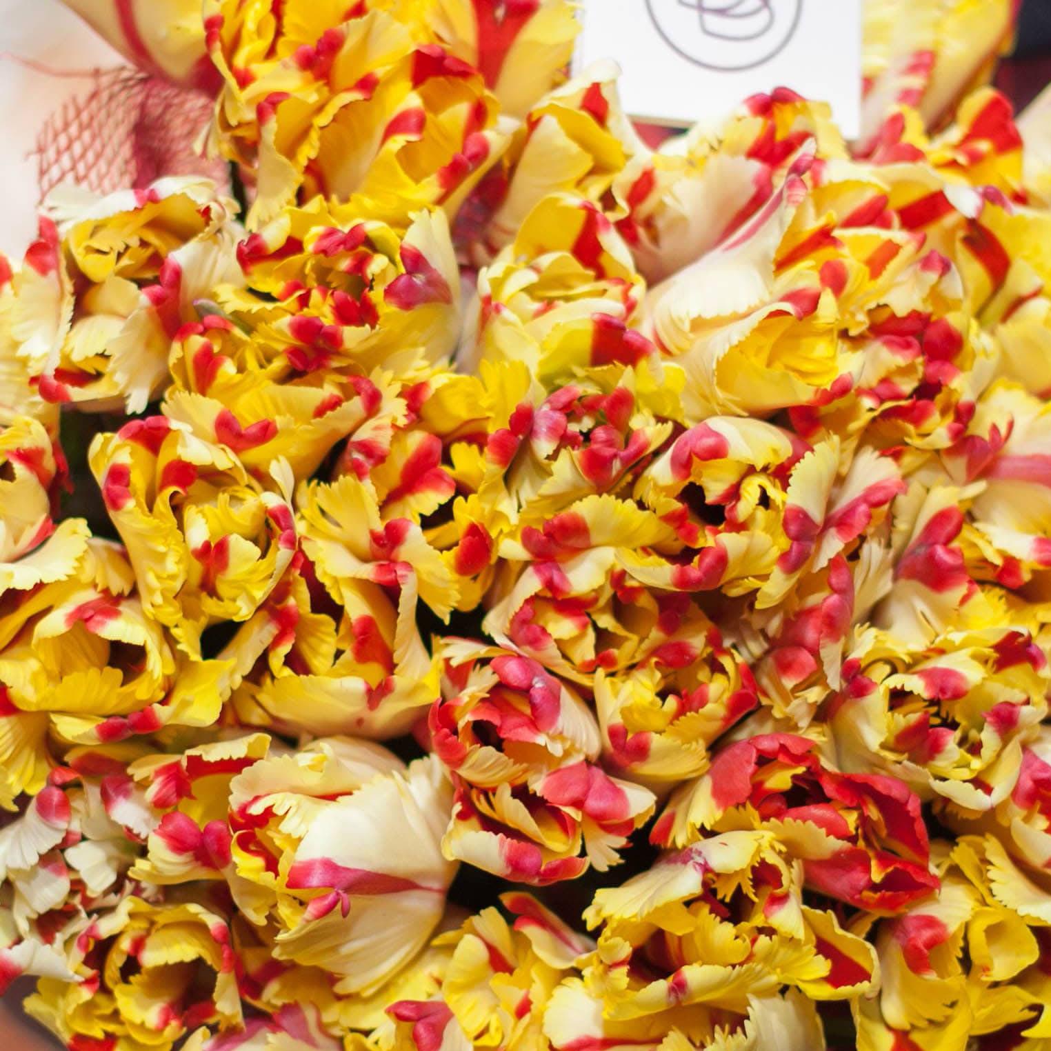 Попугайчатые желто-красные тюльпаны