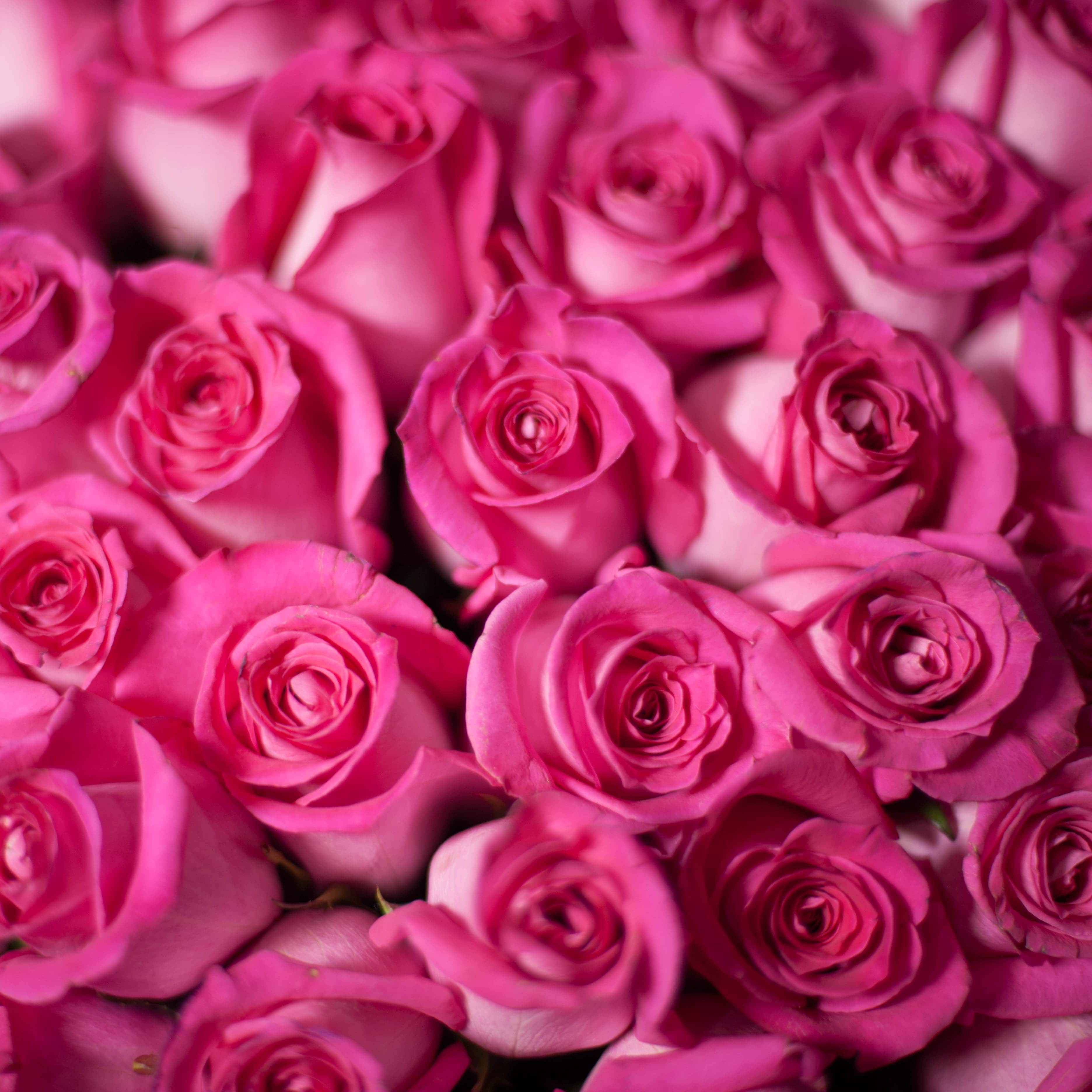 Ярко-розовые розы Topaz 50 см фото