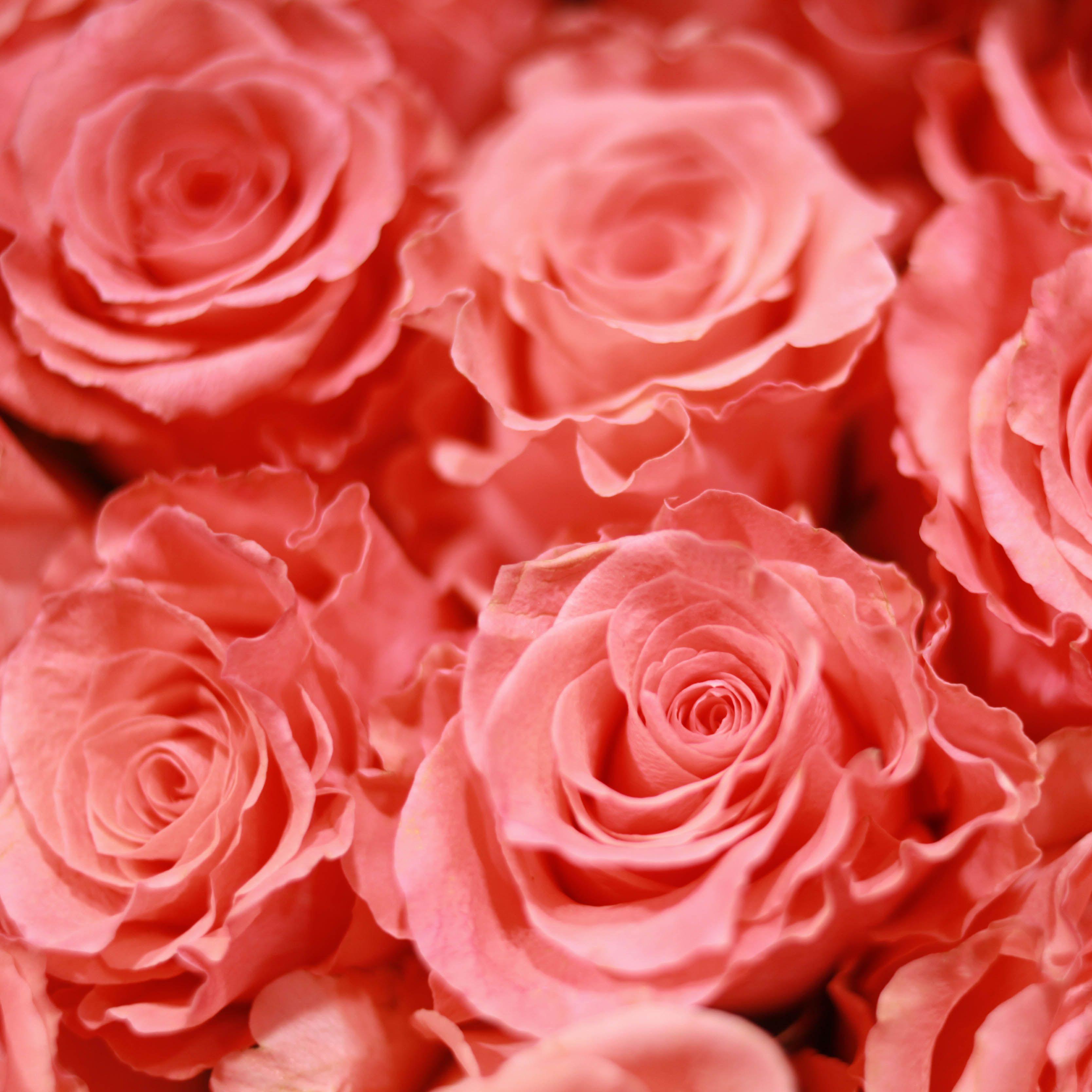 Коралловые розы Amsterdam 50 см фото