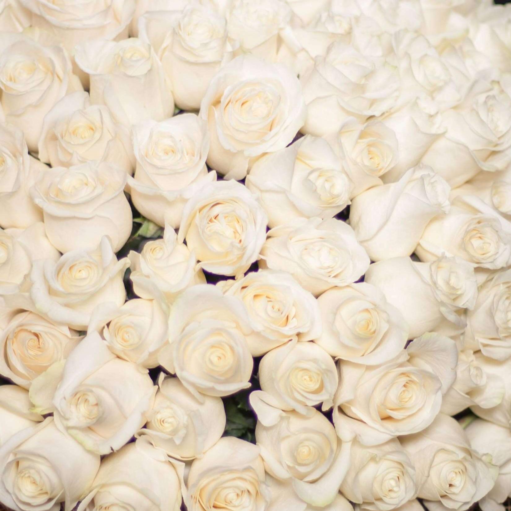 Белые розы Vendela 50 см фото