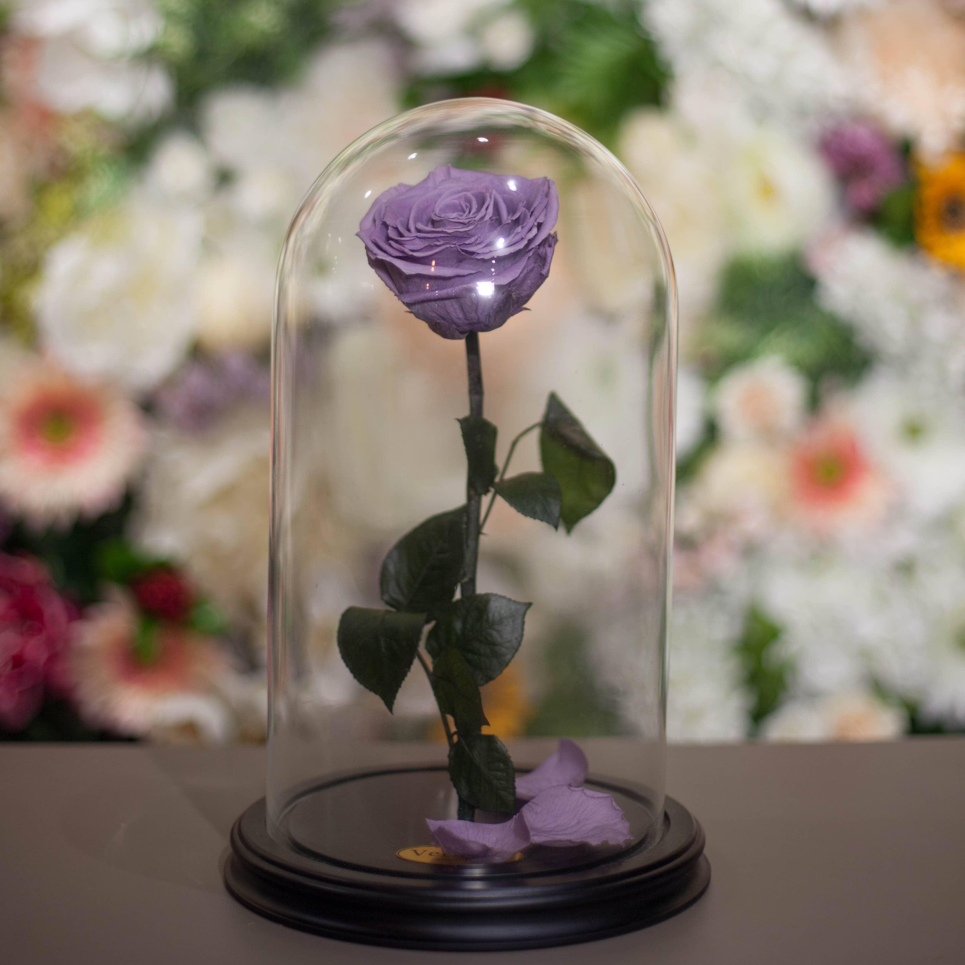 Роза в Колбе H31 * D18 Лайт виолет (сиреневая) фото