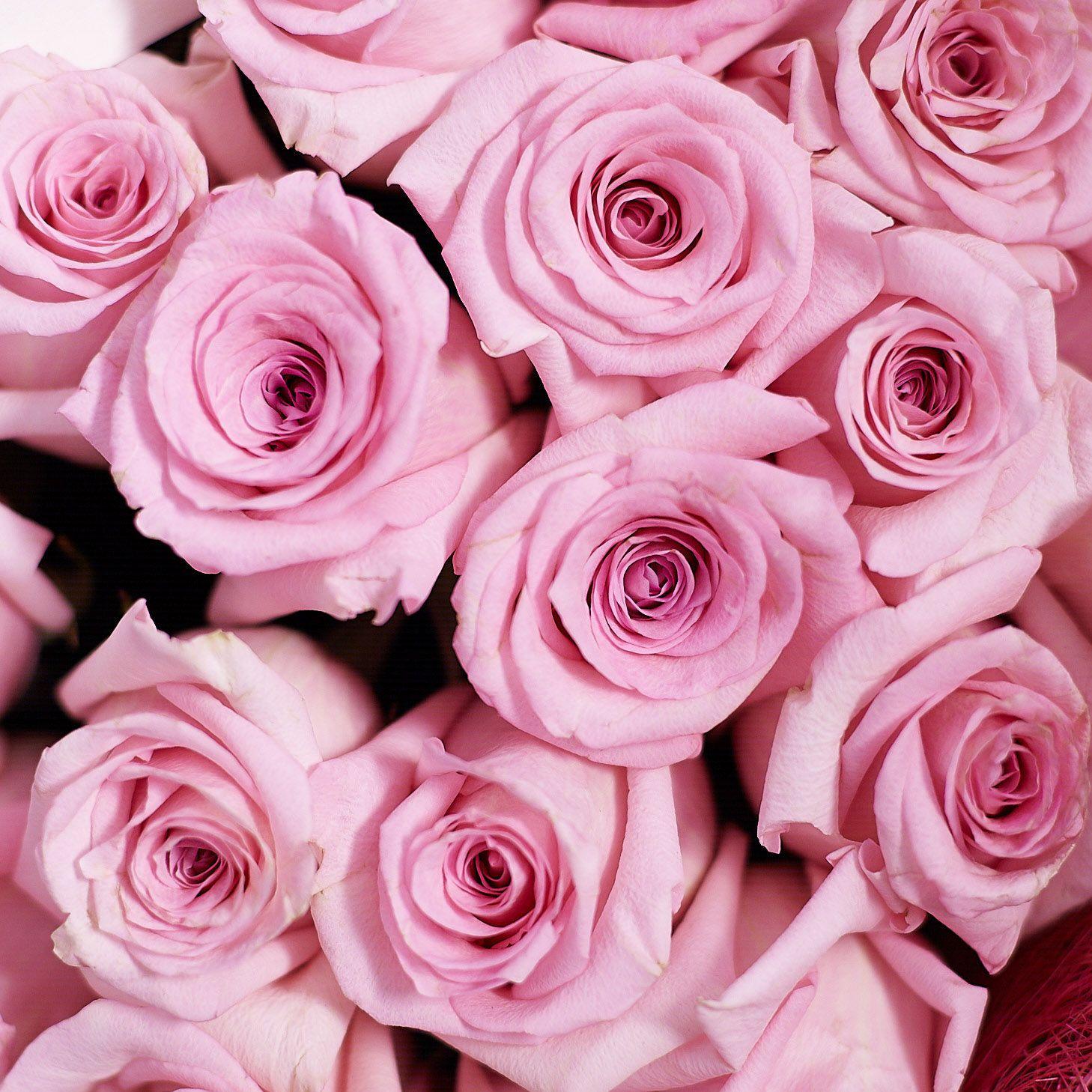 Розовые розы Jessika 70 см опт фото