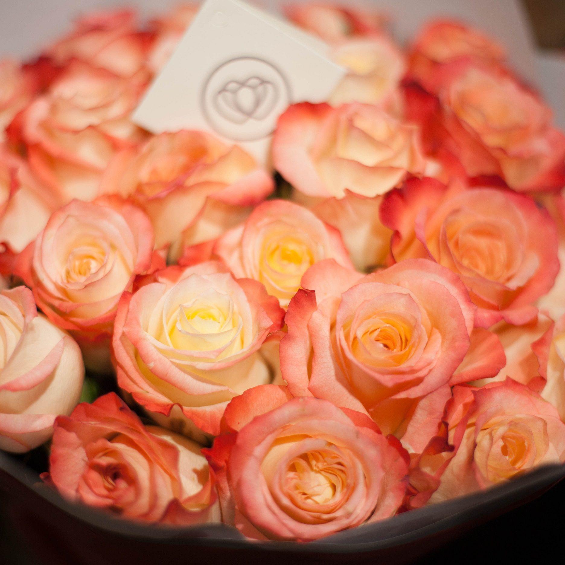 Кремовые с красной каймой розы Cabaret 40 см опт фото