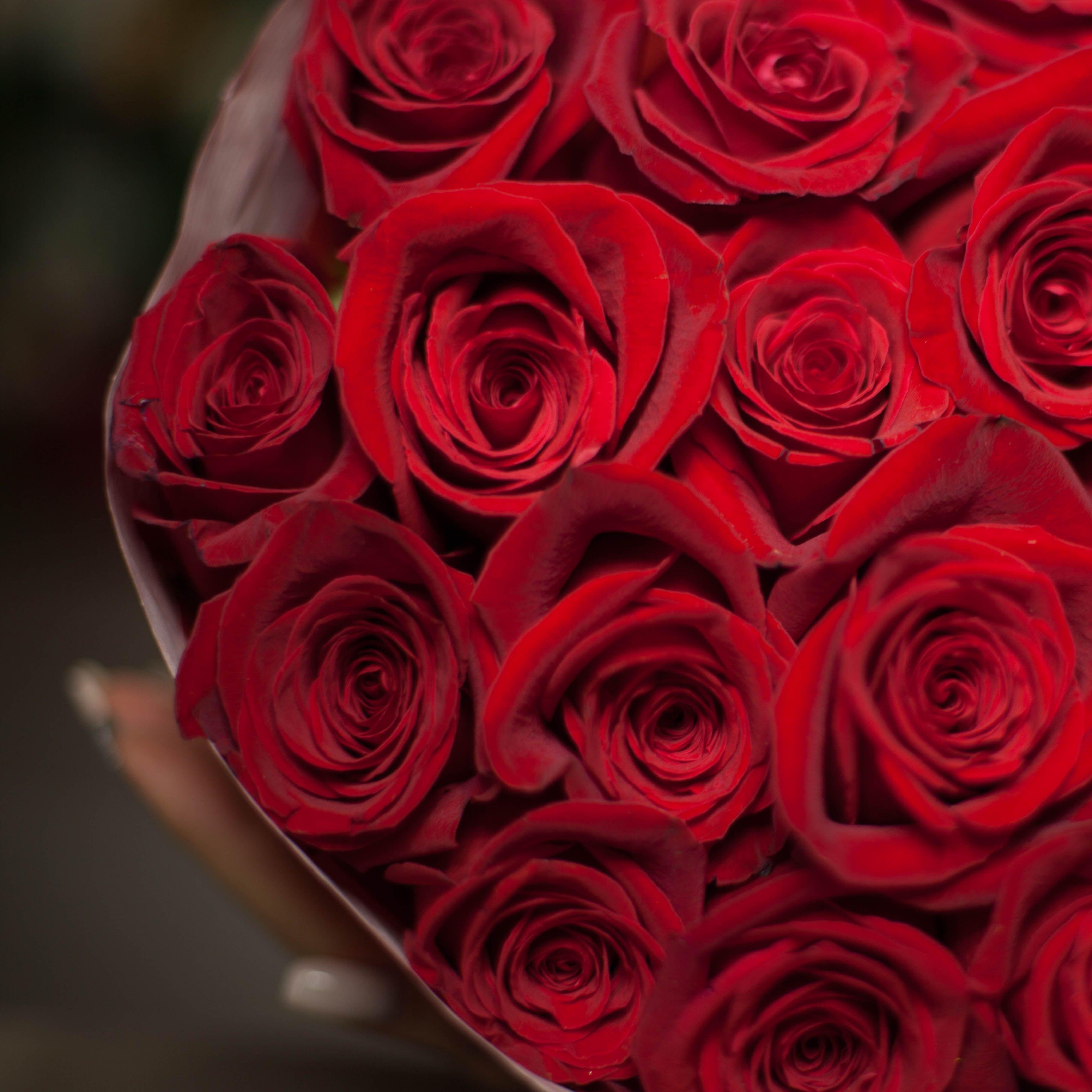 17 красных роз Freedom 60 см фото