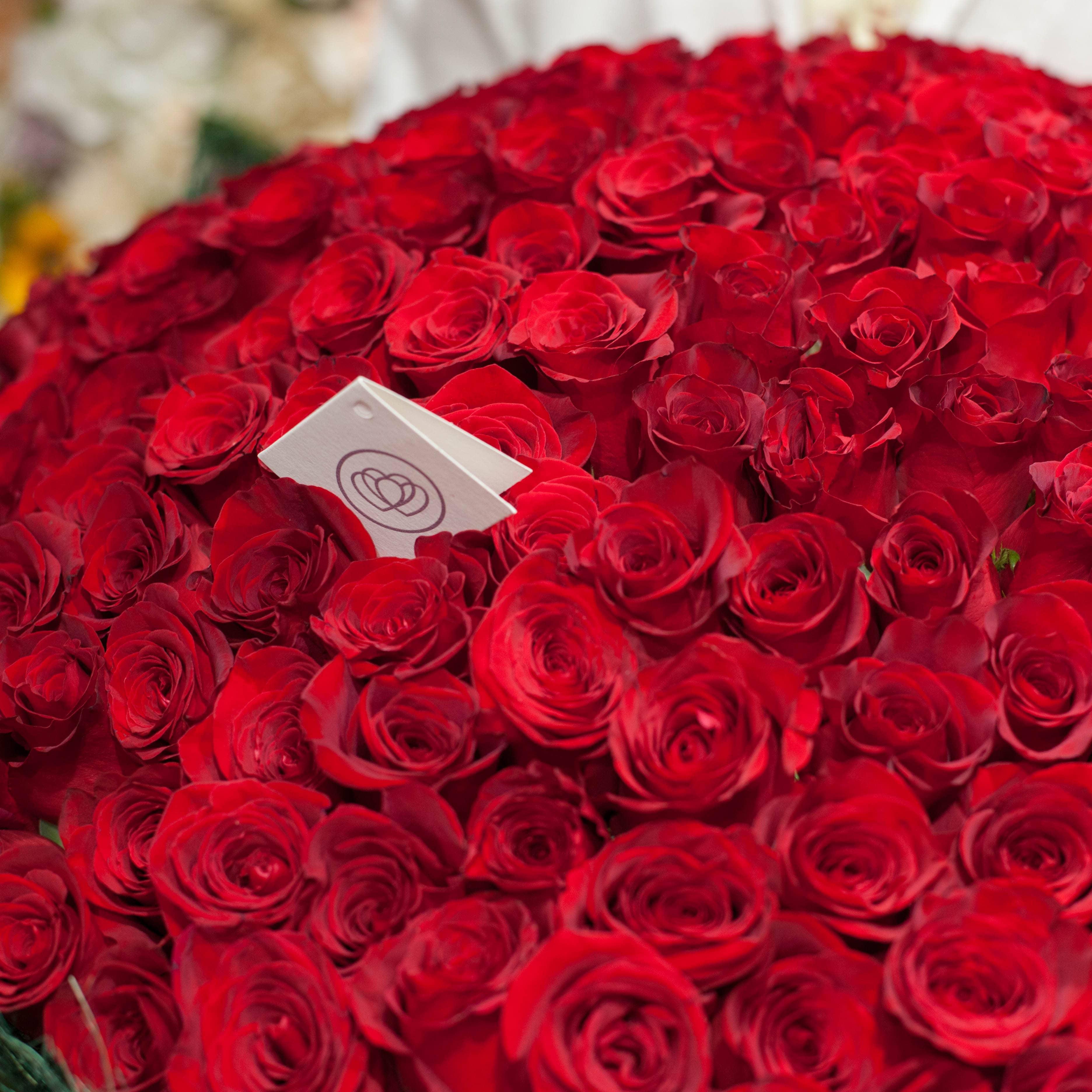 9 красных роз Freedom 50 см фото