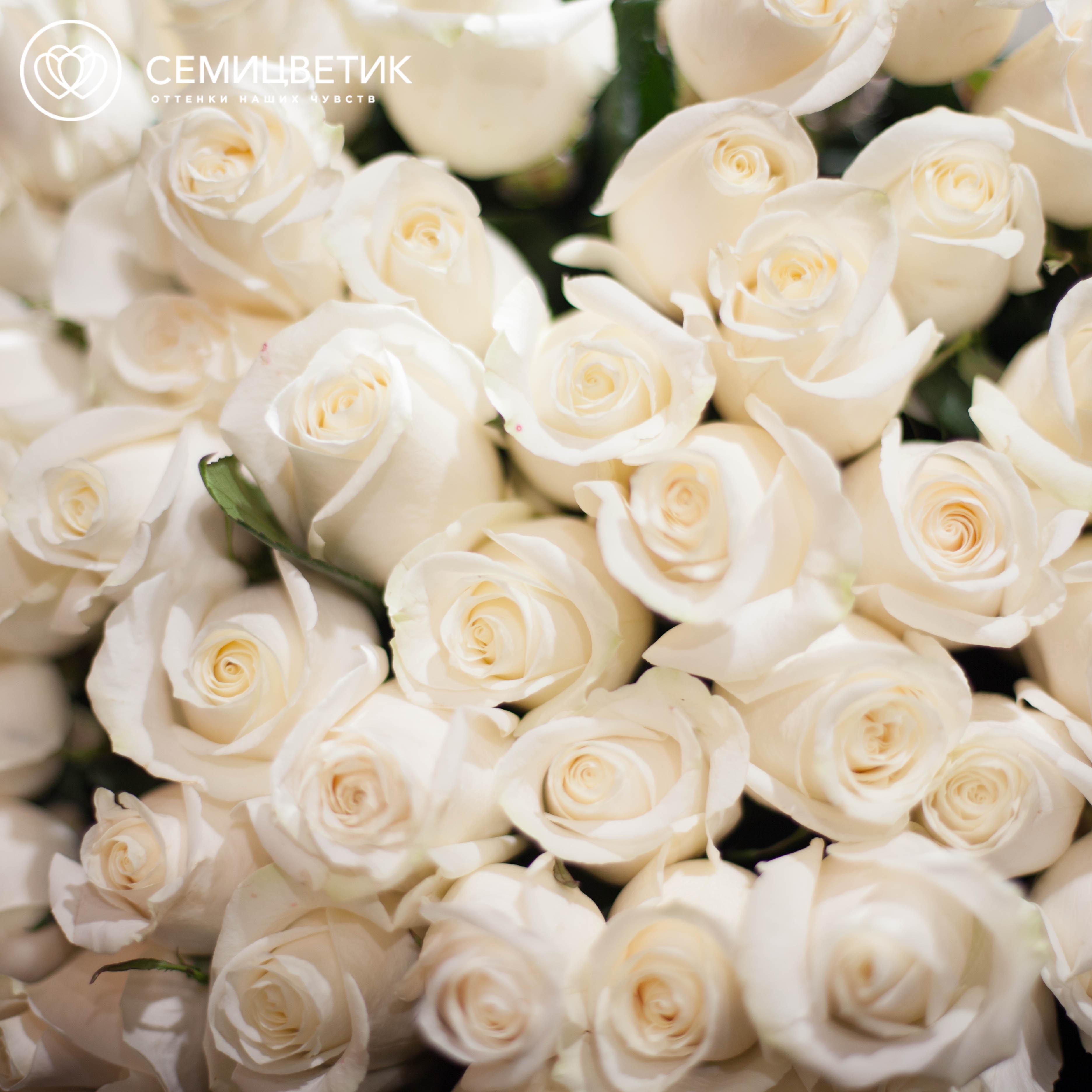 7 белых роз Alba 70 см фото