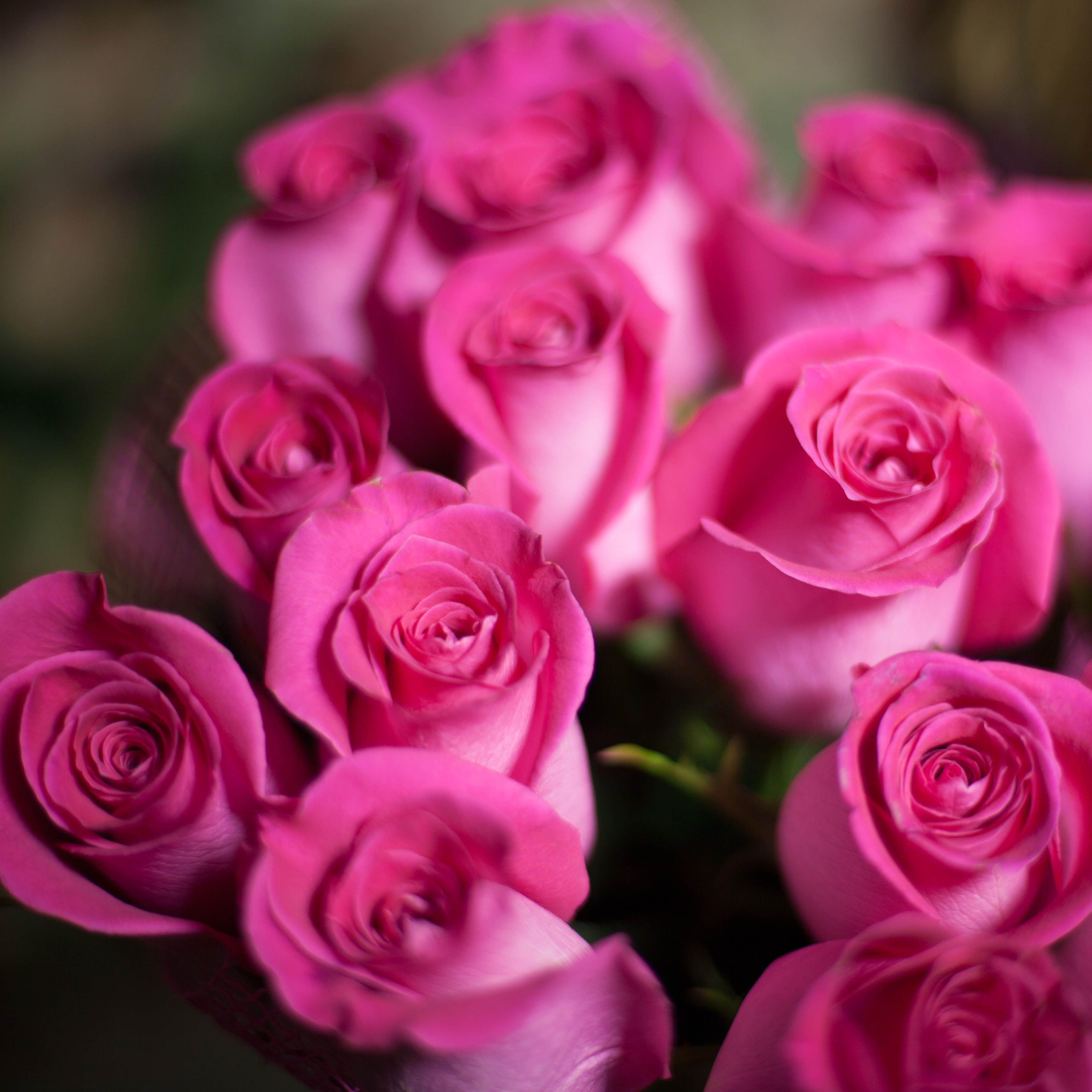 17 розовых роз Topaz 50 см фото