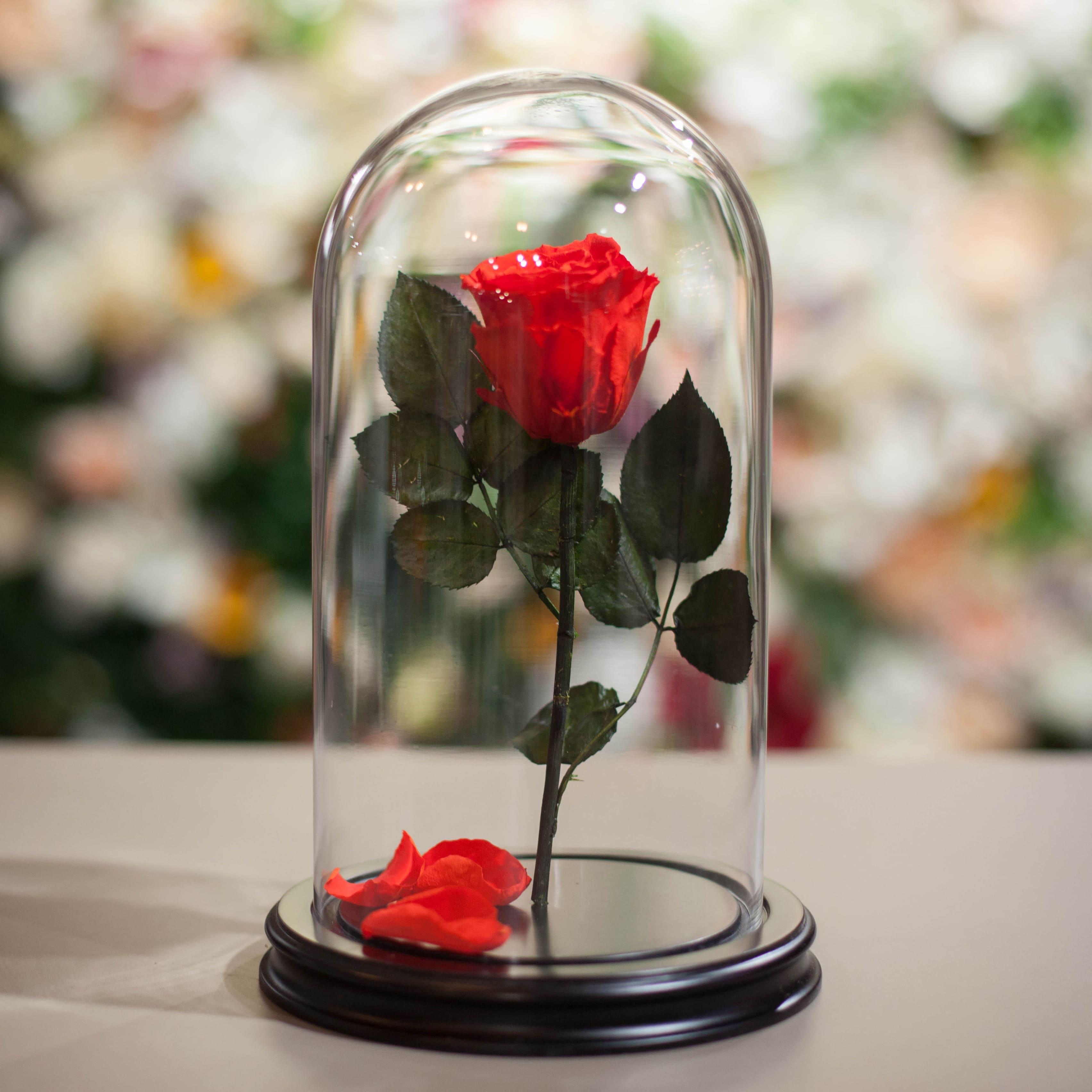 Роза в колбе 28 см (Красная) фото