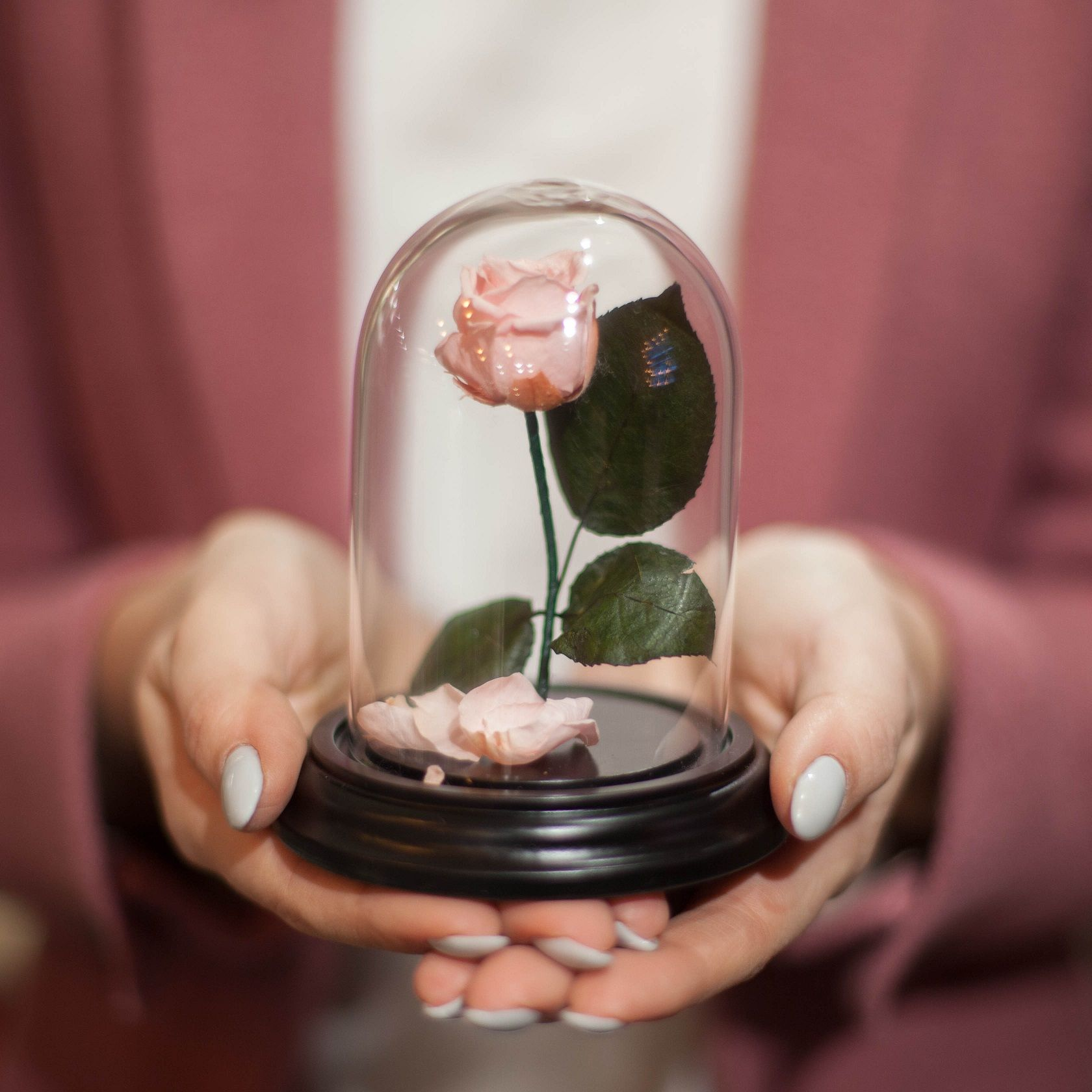 Роза в Колбе H12 * D9 Лайт пинк (светло-розовая) фото