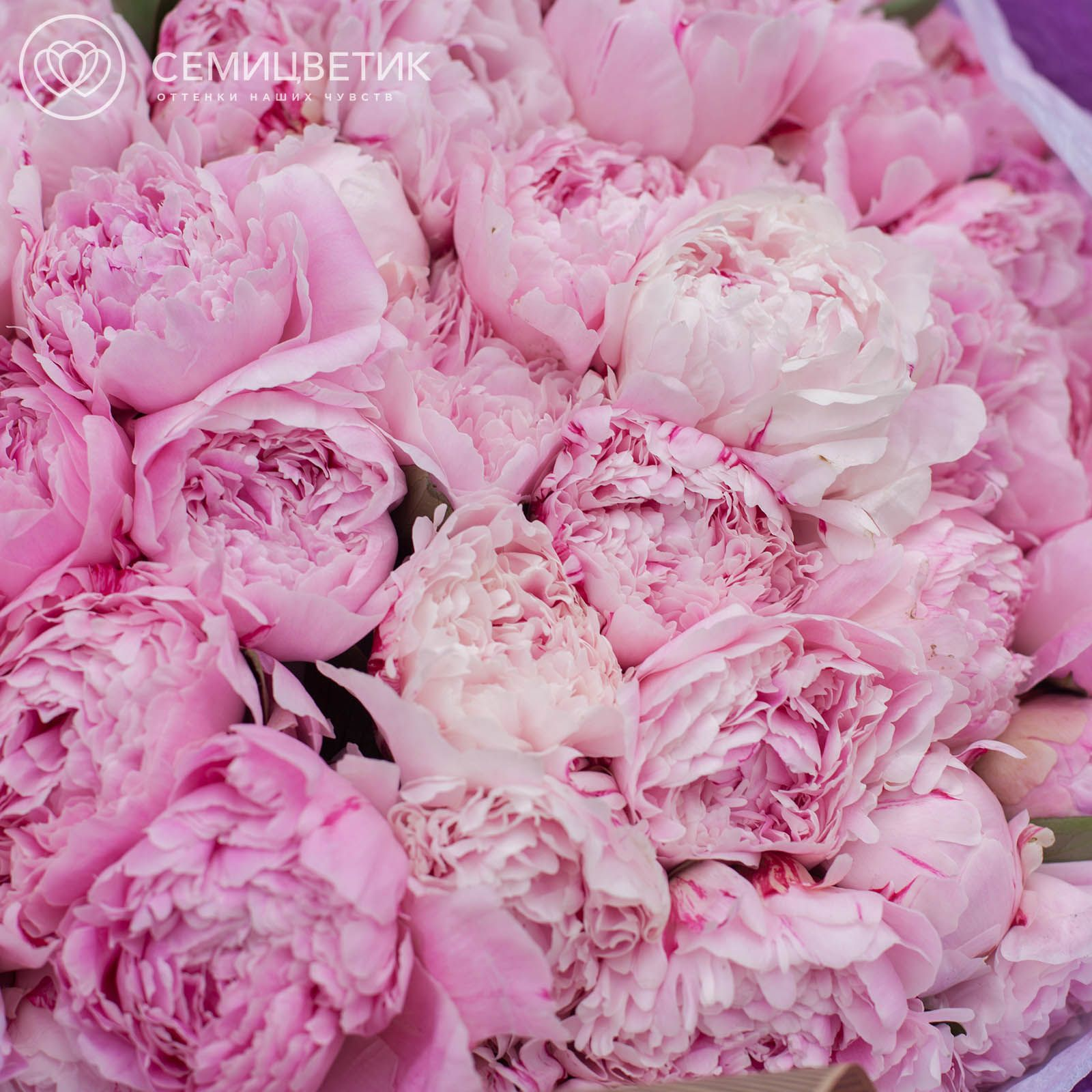 Россыпь Пион Premium Розовый фото