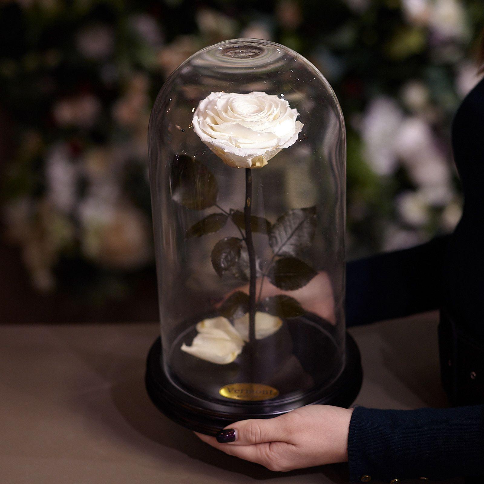 Роза в Колбе H31 * D18 Ивори (белая) фото