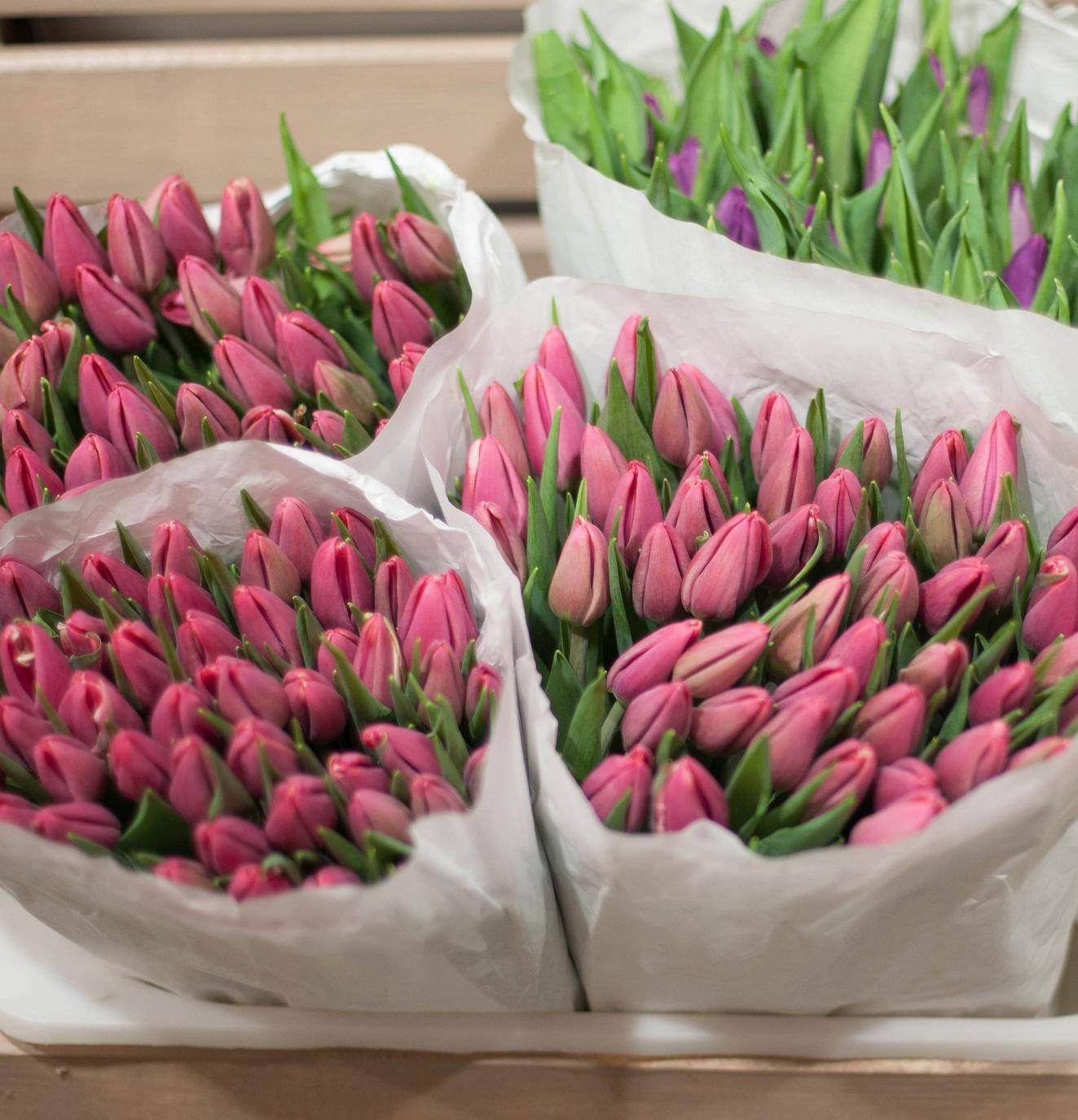 Тюльпаны микс мелкий и крупный опт фото