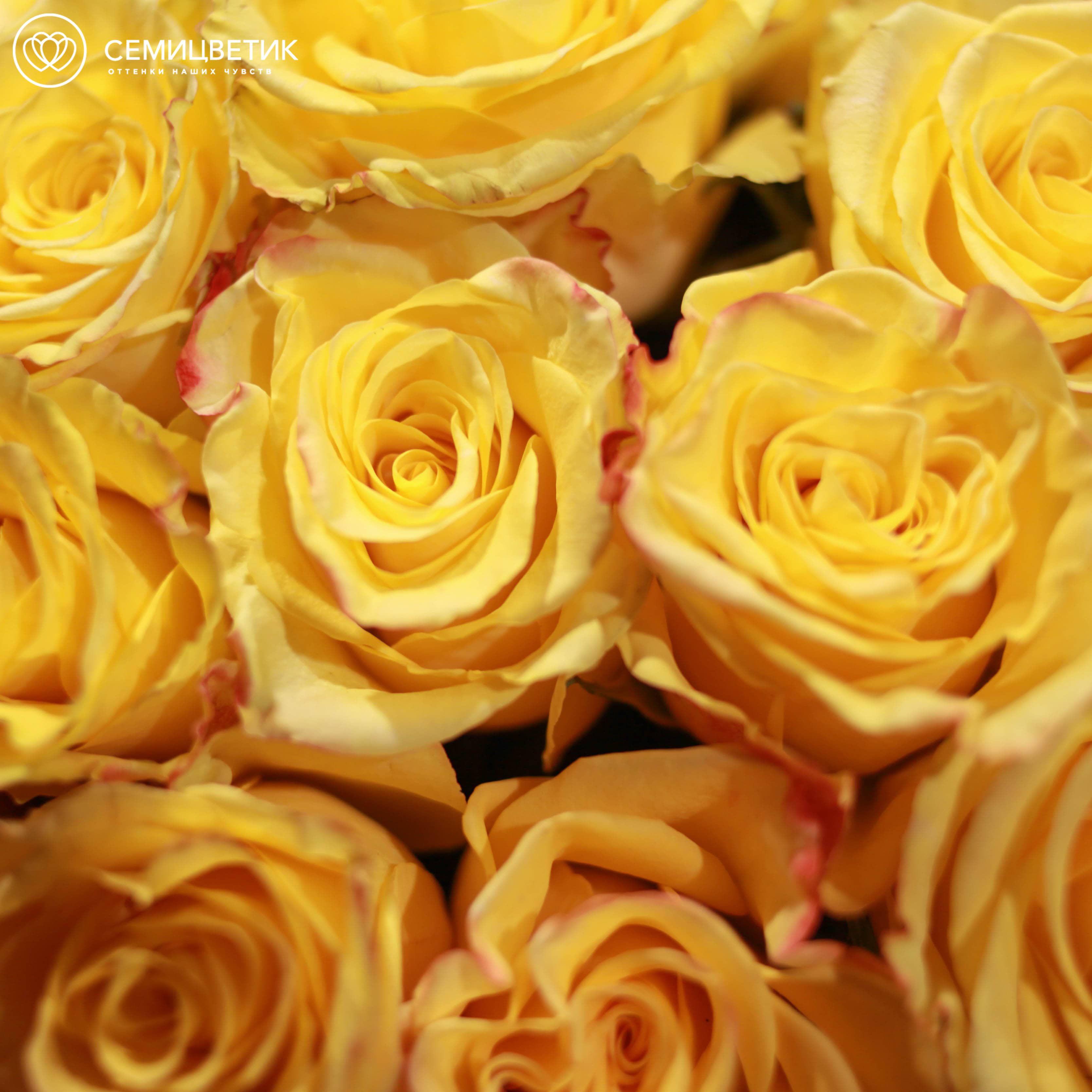 7 желтых роз High Yellow Magic 50 см фото