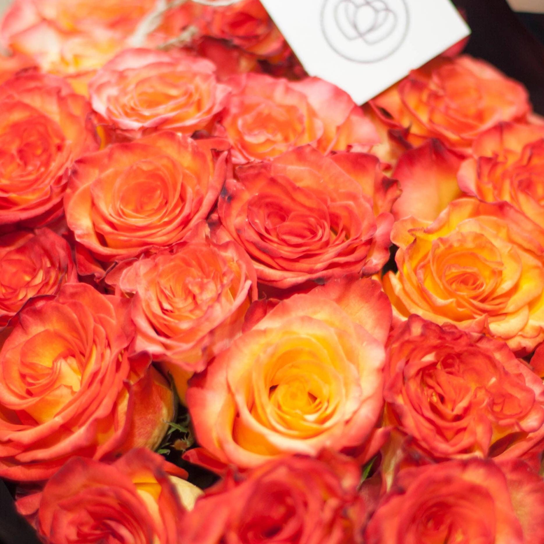 Желтые розы с красной каймой High Magic 50 см фото