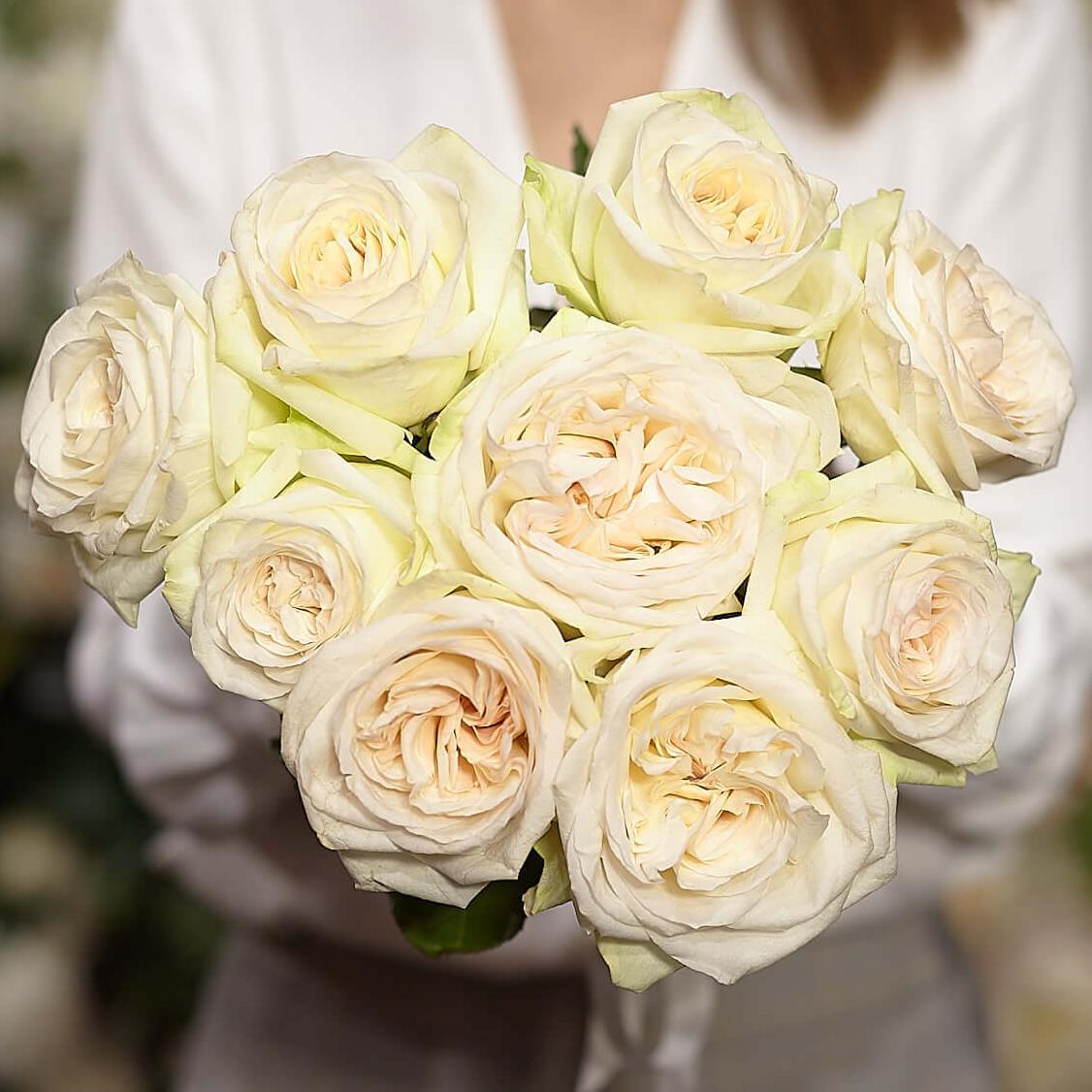 9 белых ароматных пионовидных роз White O'Hara 40 см фото