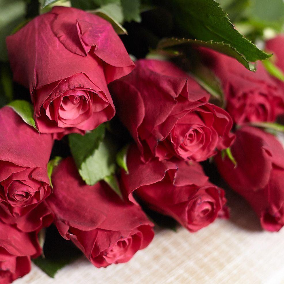 Малиновые розы 40 см Premium фото