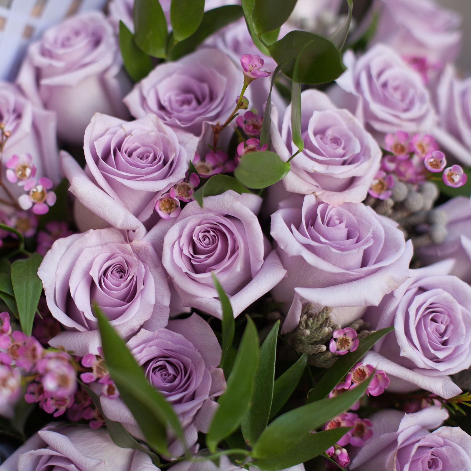 Светло-сиреневые розы Ocean Song 60 см опт фото