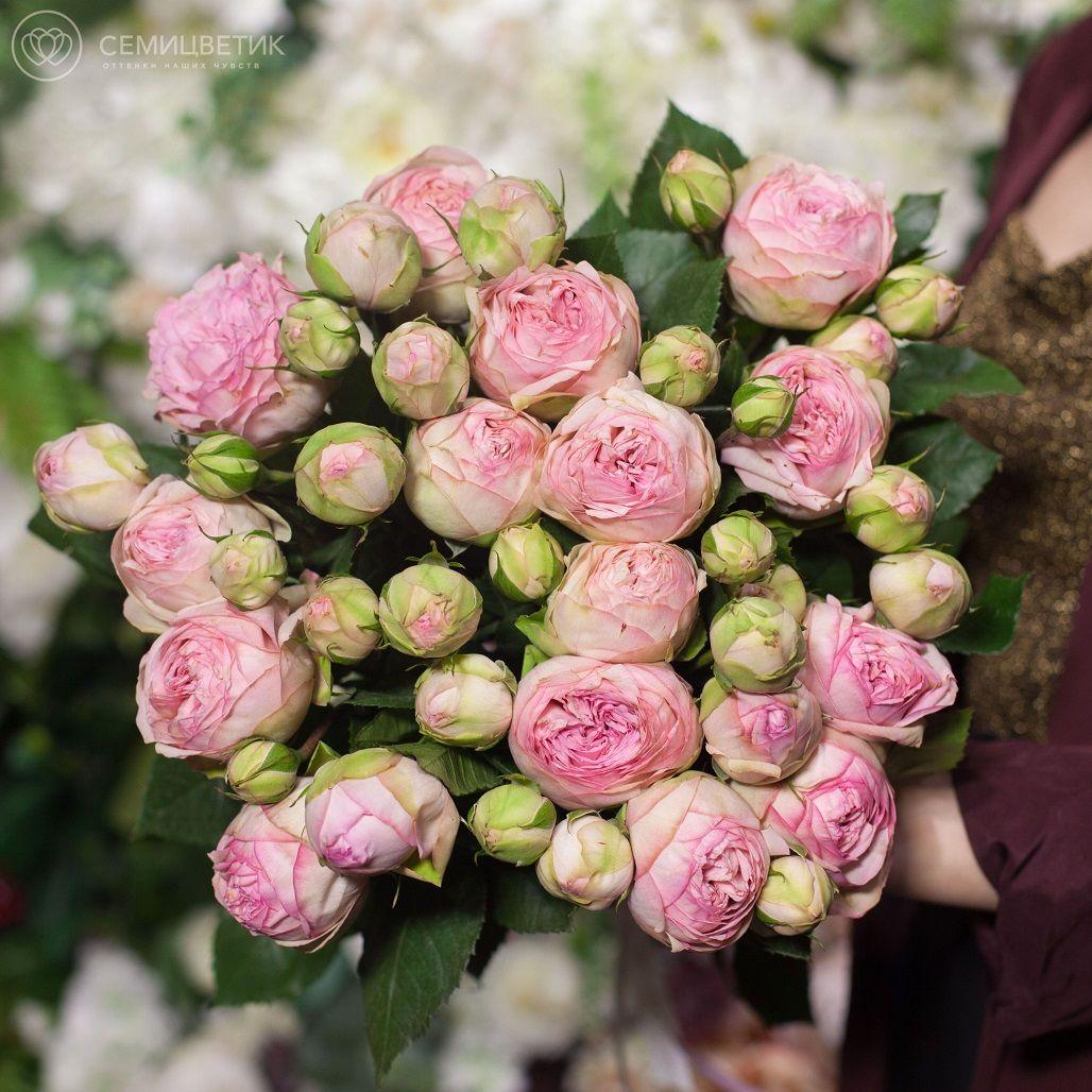 15 пионовидных роз Bridal Piano 50 см фото