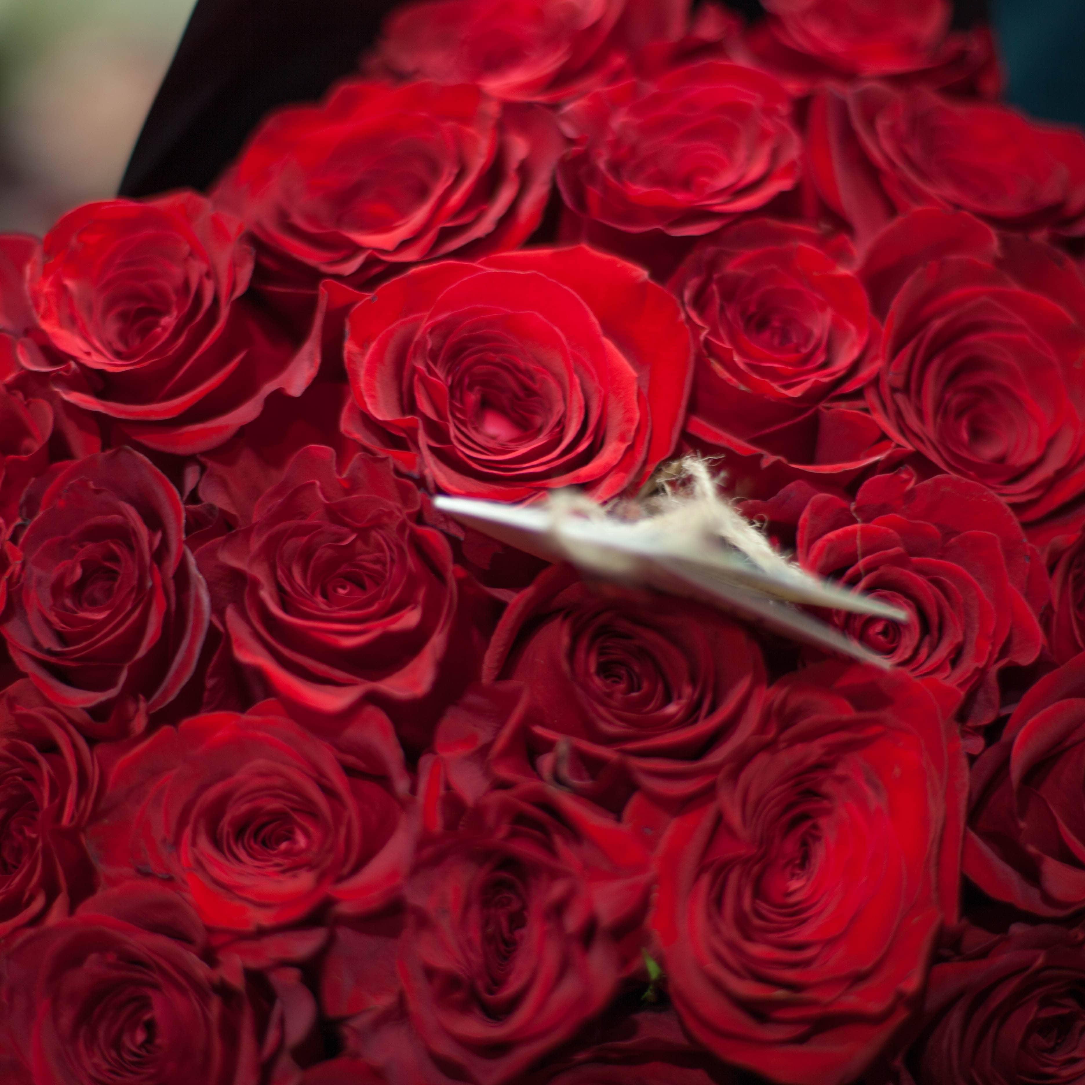 5 красных роз Freedom 50 см фото
