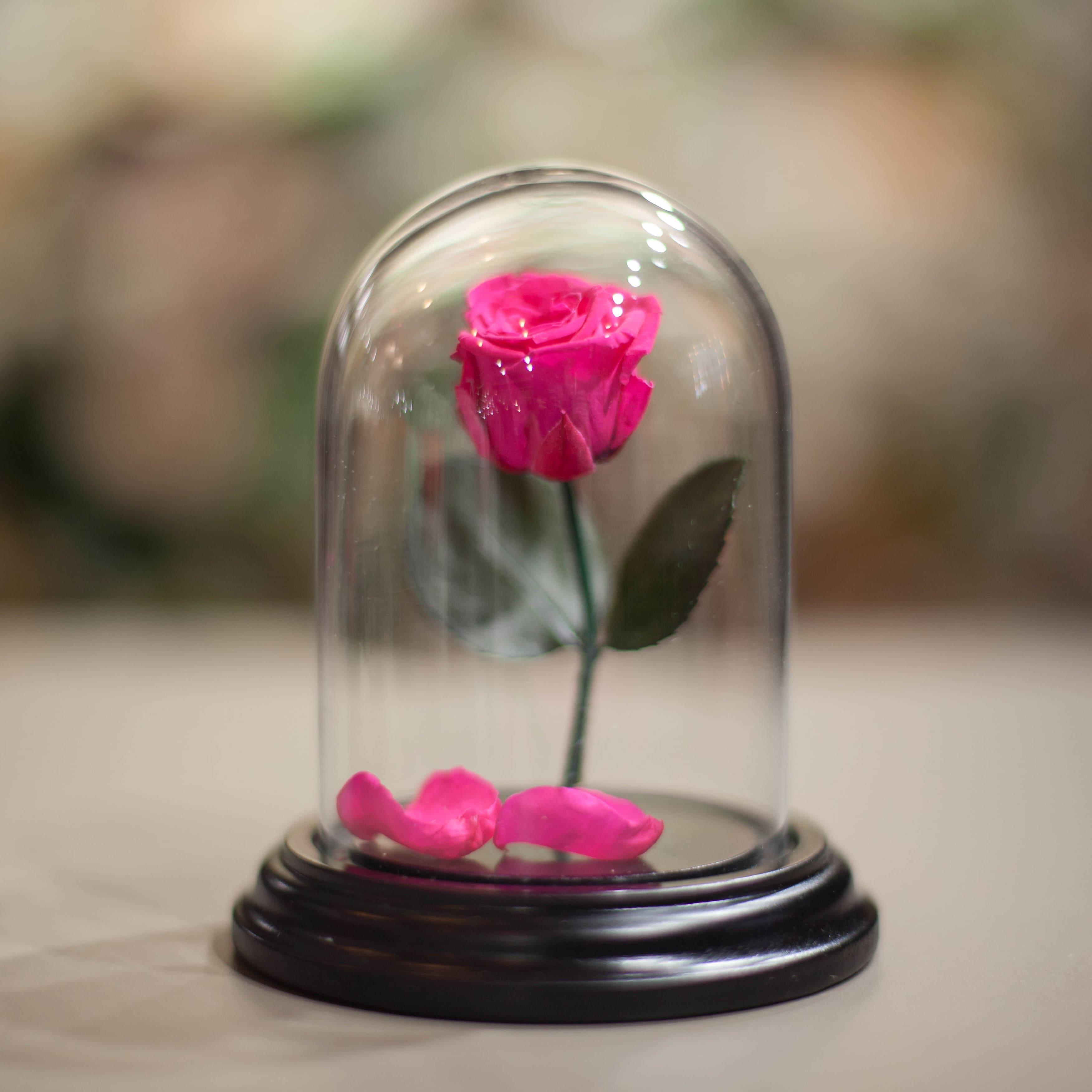 Роза в Колбе H12*D9 фото