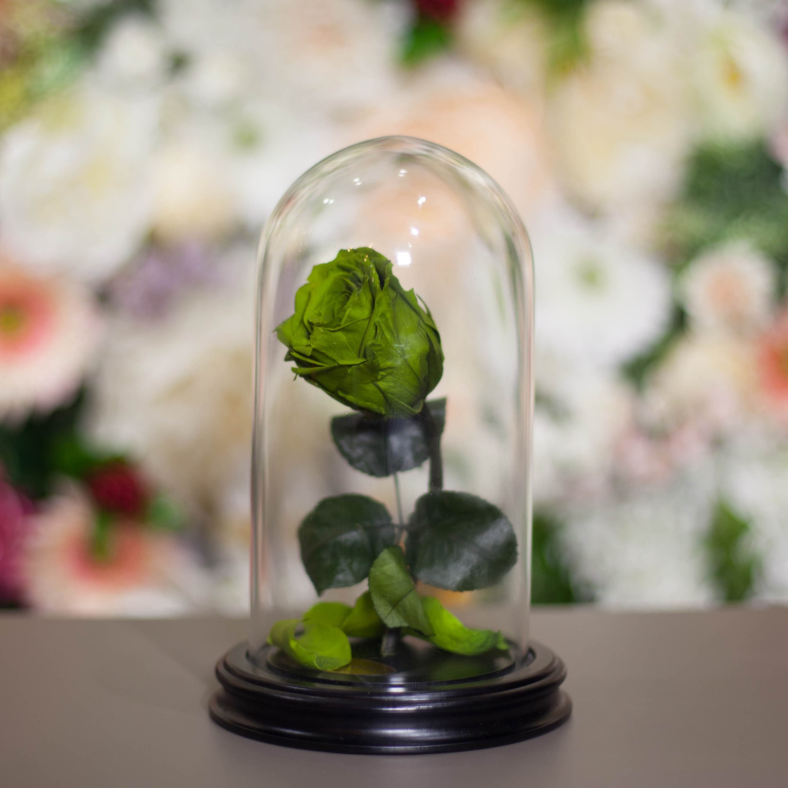 Роза в Колбе H22 * D13 Олив грин (зеленая) фото