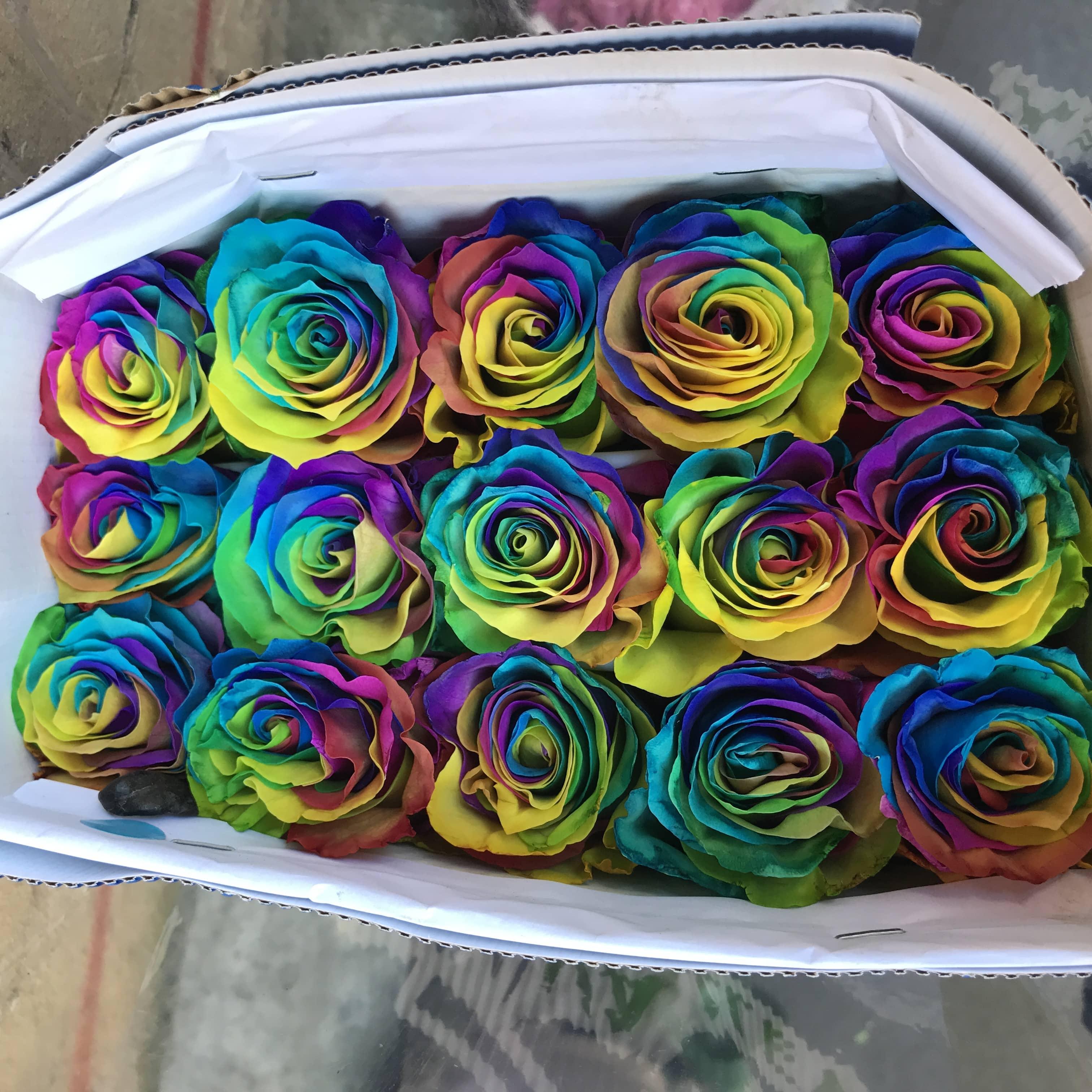 Радужные розы фото