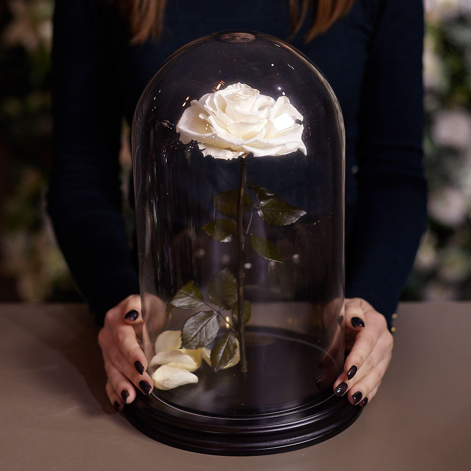 Роза в Колбе H33 * D20 Ивори (белая) фото