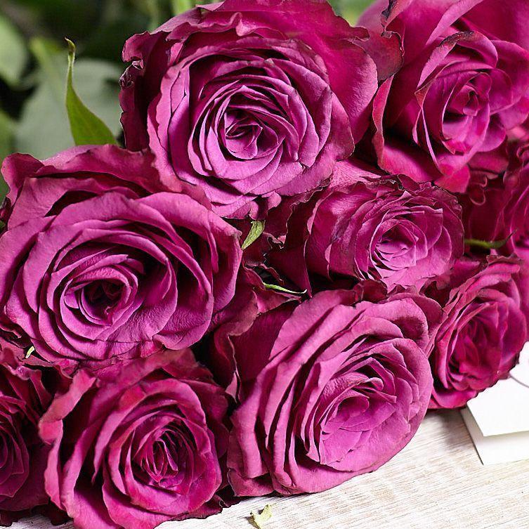 Тёмно-фиолетовые розы 40 см Premium фото