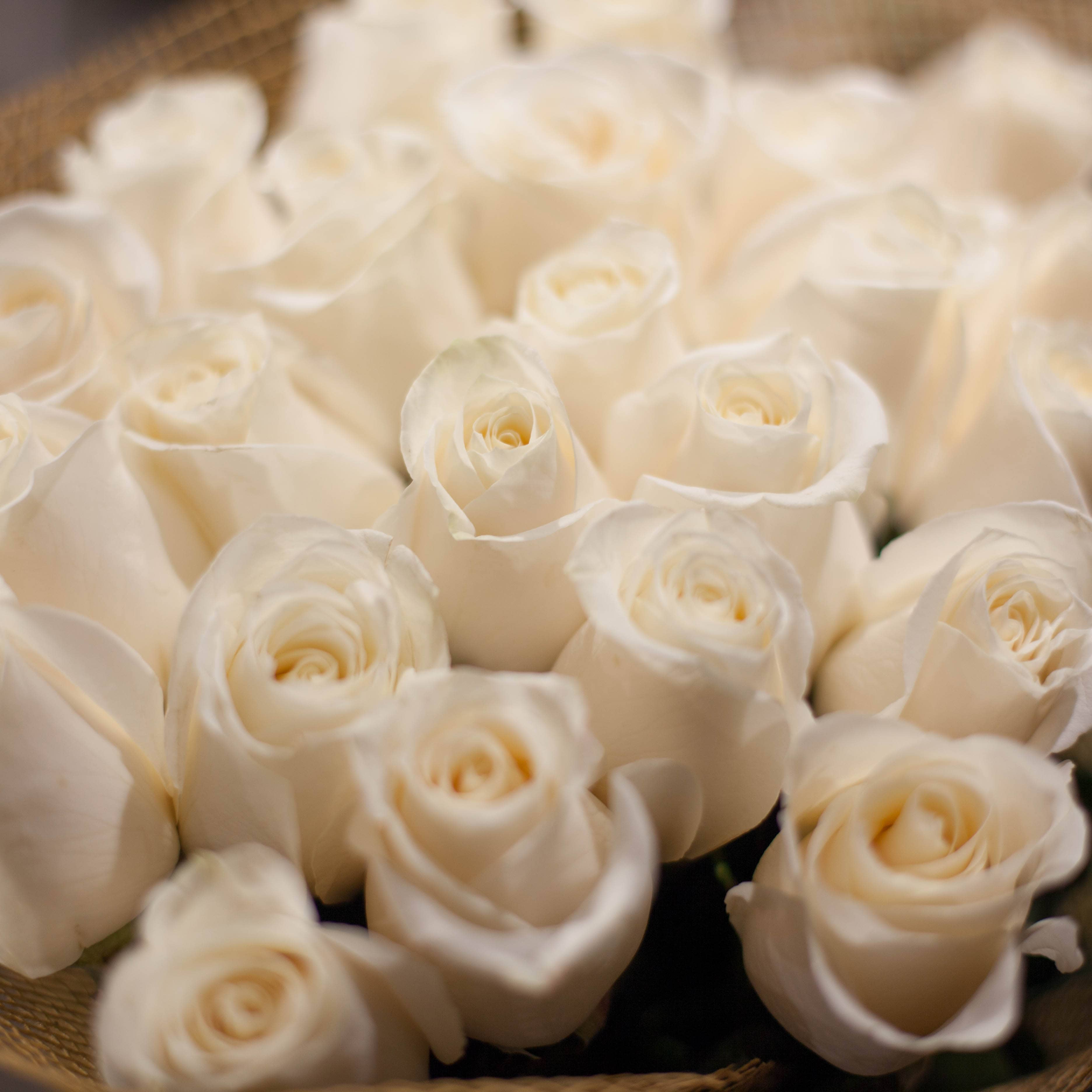 35 белых роз Alba 50 см фото