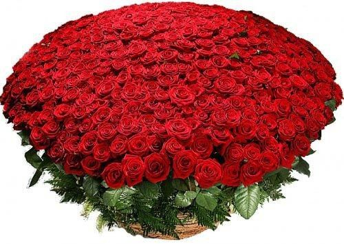 Корзина из 501 красной розы в корзине фото