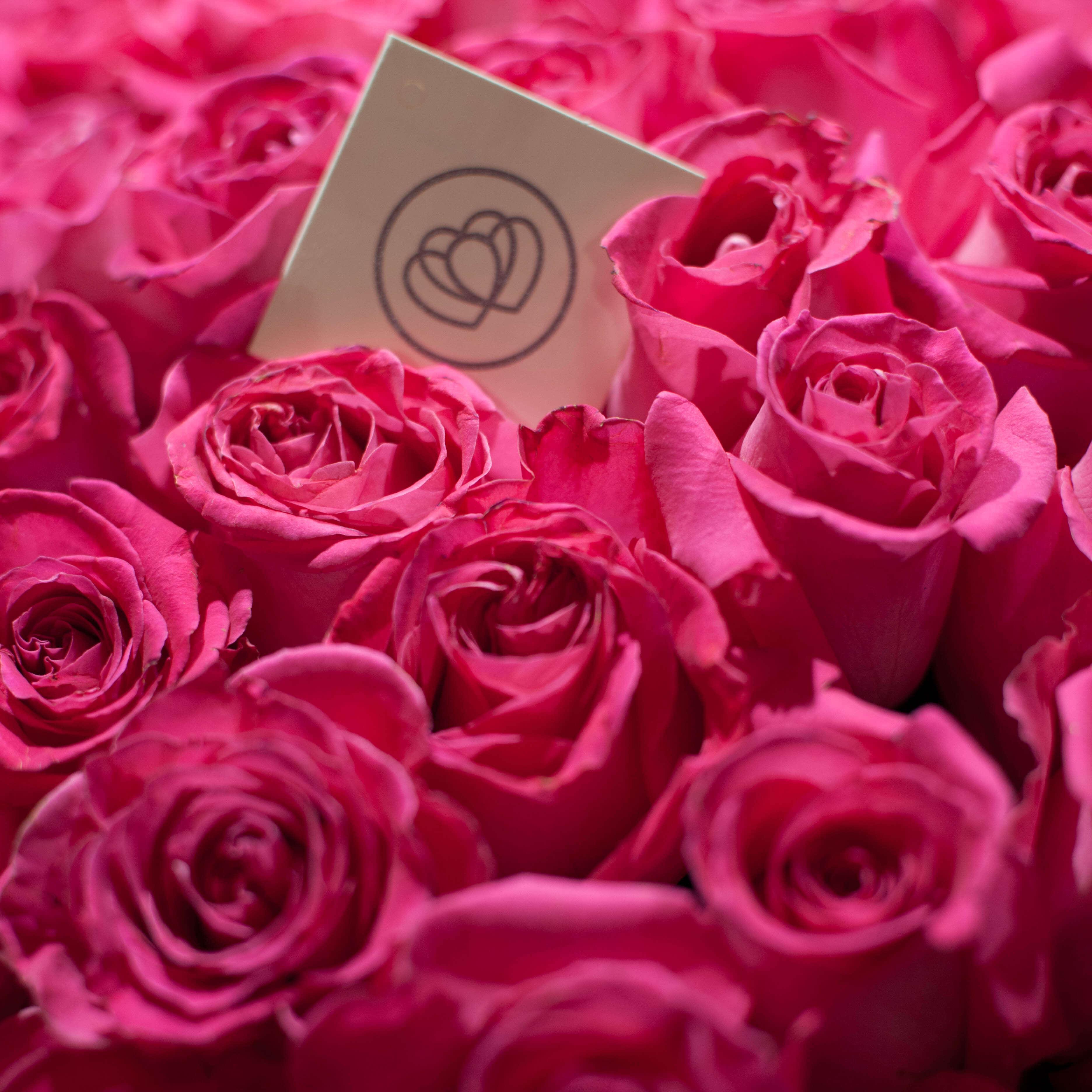 Ярко-розовые розы Topaz 60 см фото