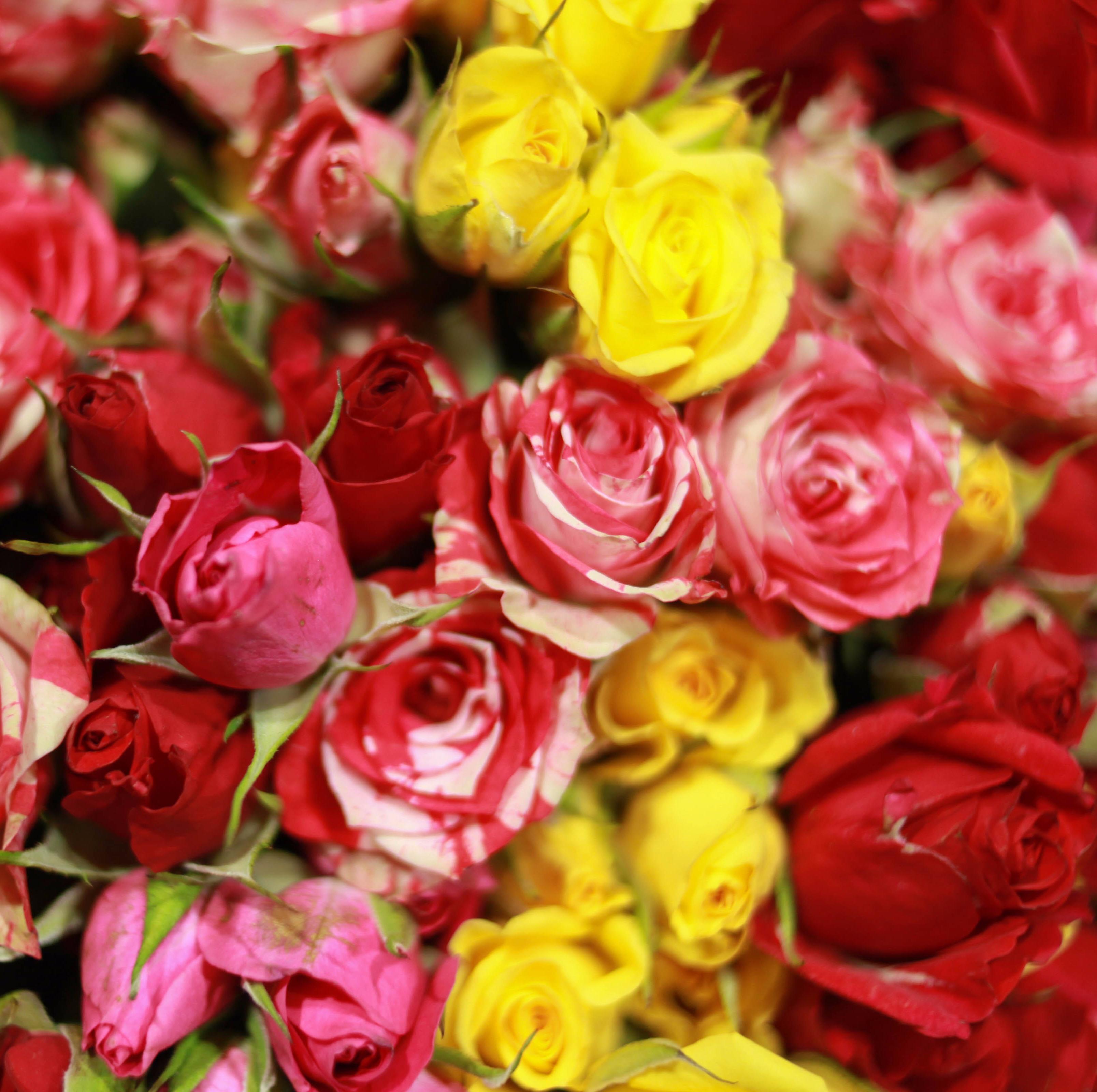 9 кустовых цветных роз 40 см фото