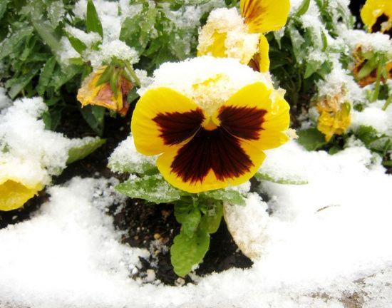 Какие комнатные растения цветут зимой?