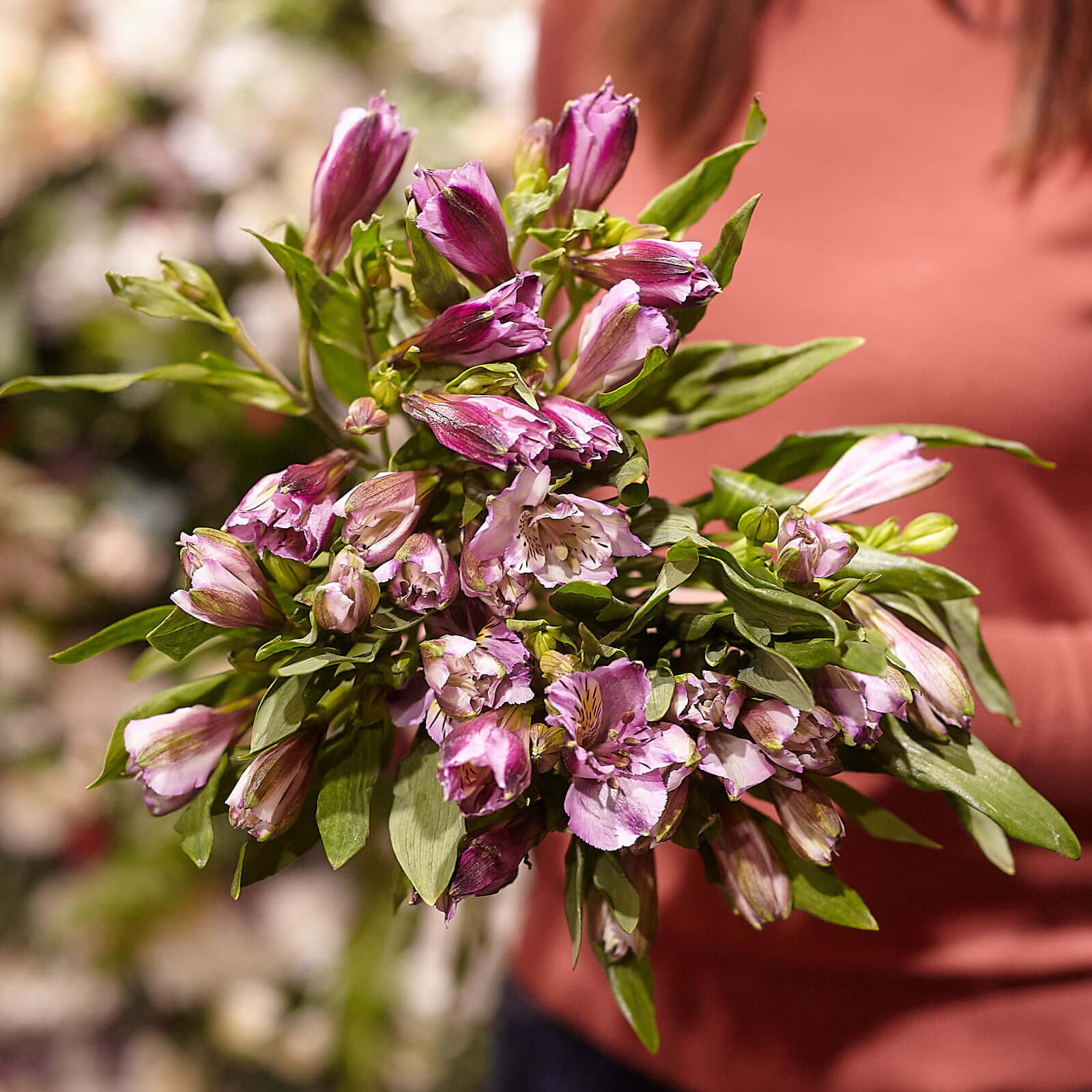 7 фиолетовых альстромерий фото