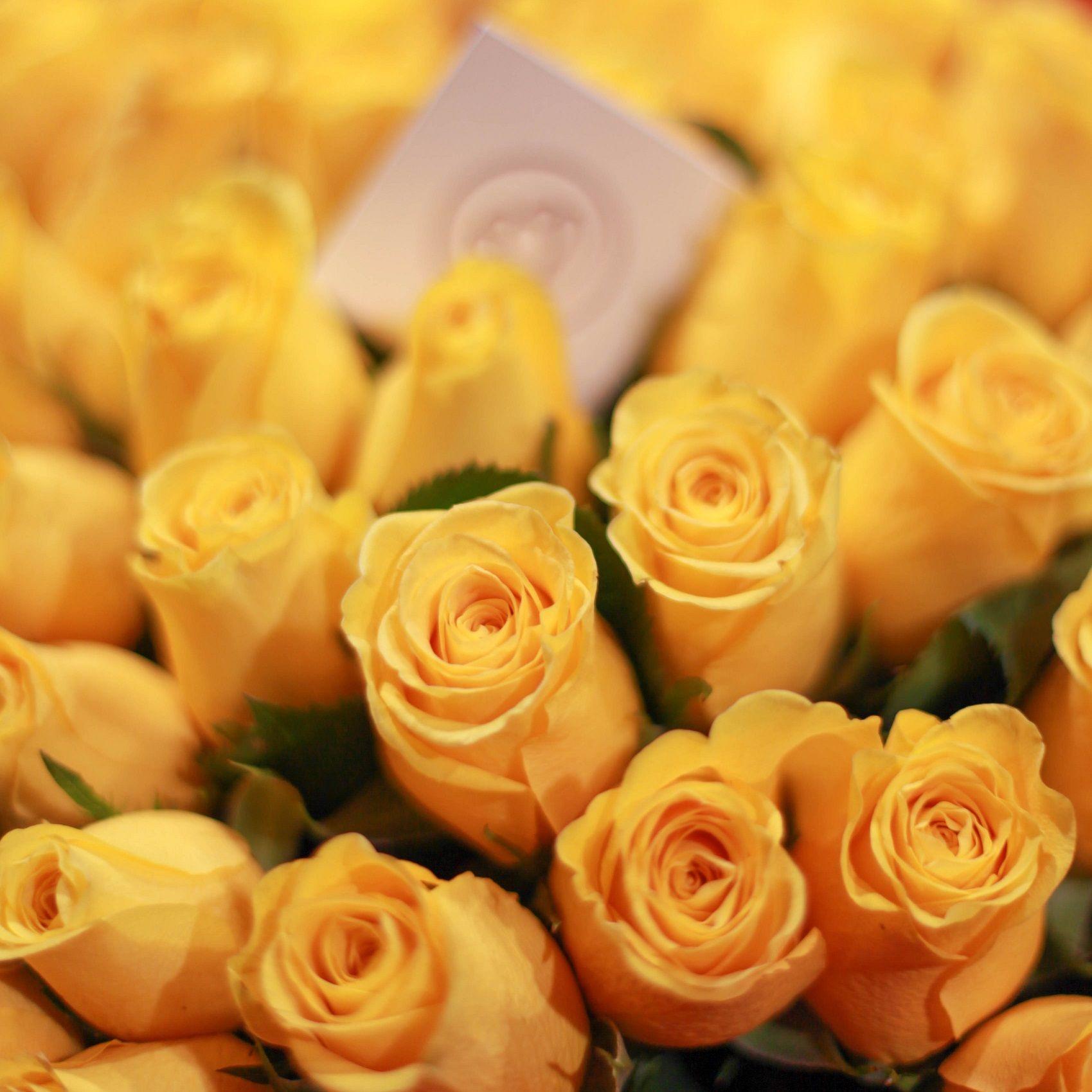 Желтые розы Tara 40 см фото