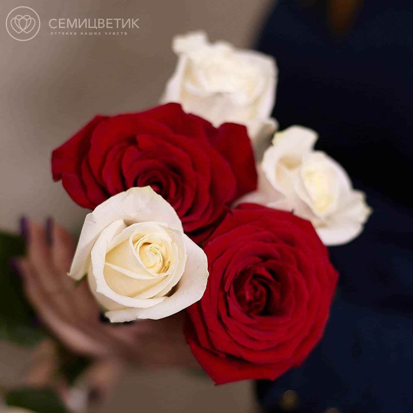 5 красных и белых роз 50 см фото