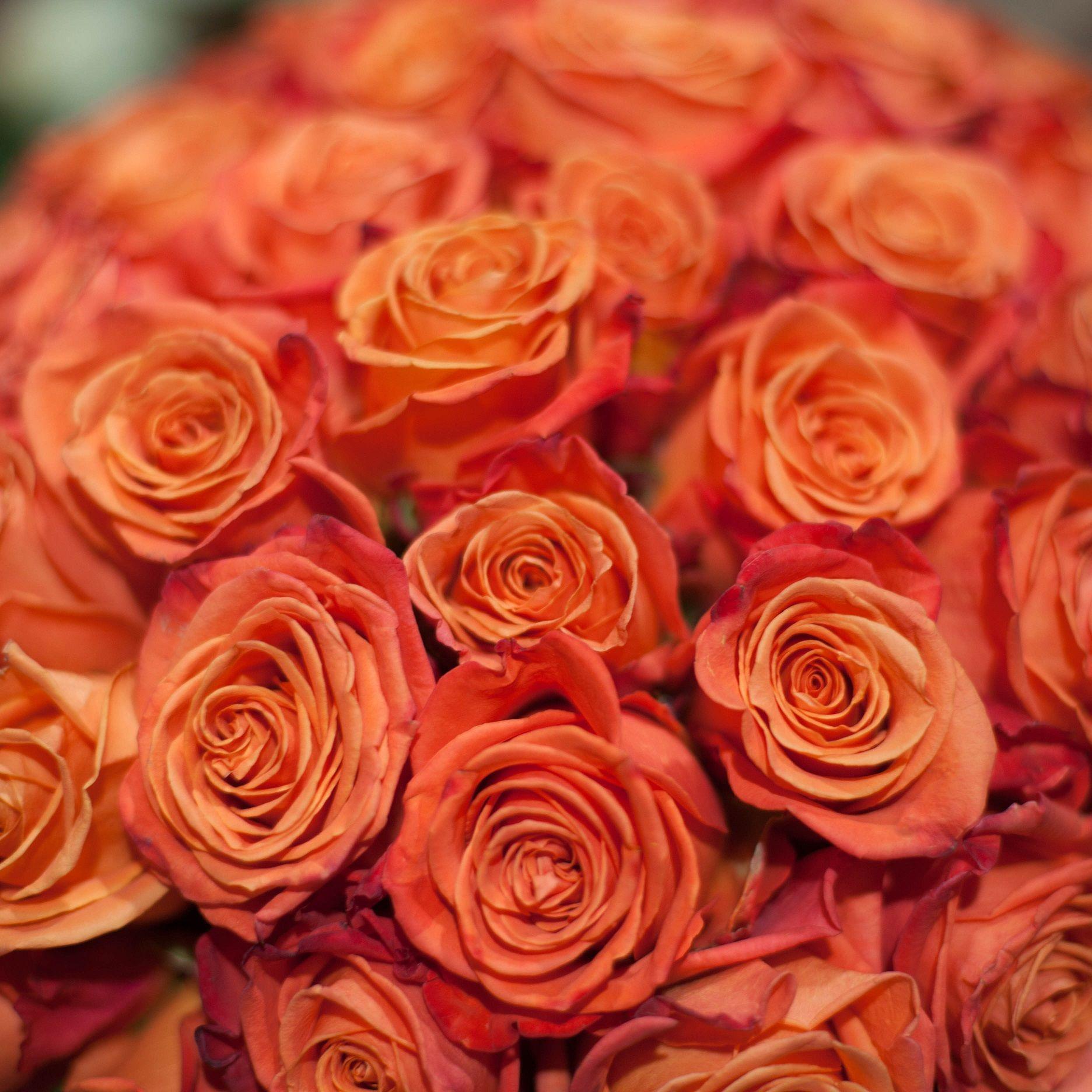 Оранжево-красные розы Orange Crush 40 см фото